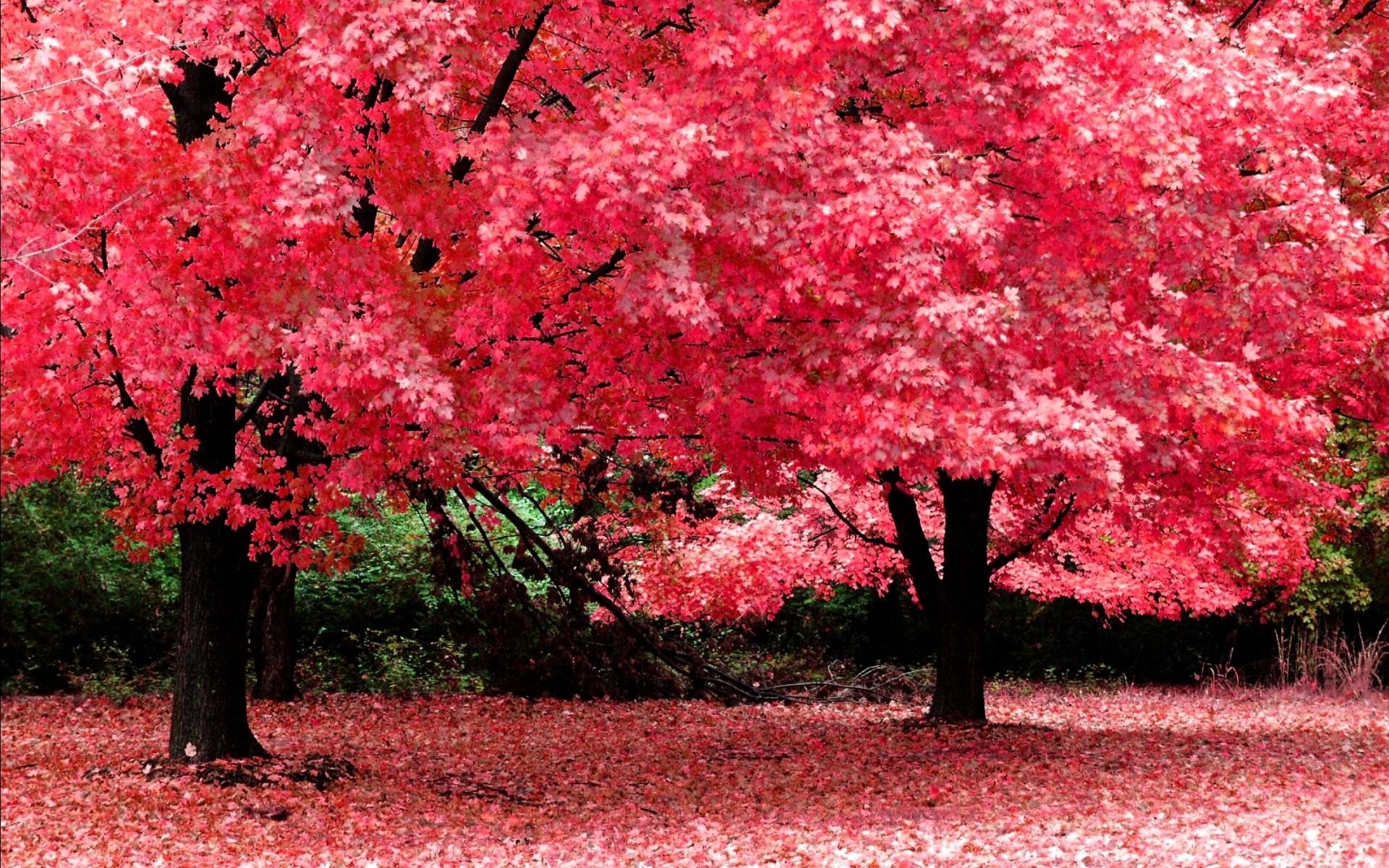 Beautiful nature desktop clipart free download – ClipartFox. Beautiful nature  wallpaper .