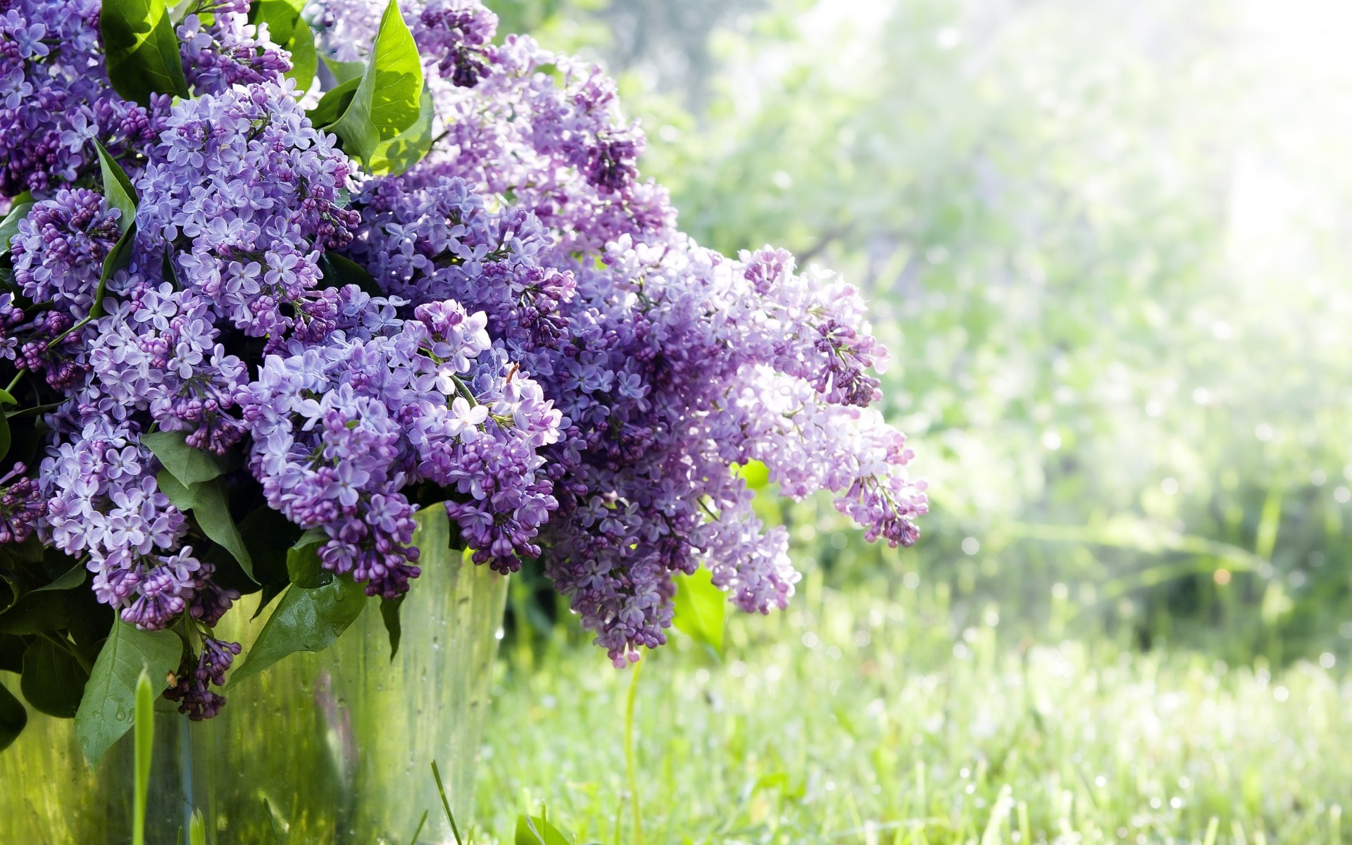 lilac twigs flowers bucket spring nature grass wallpaper background