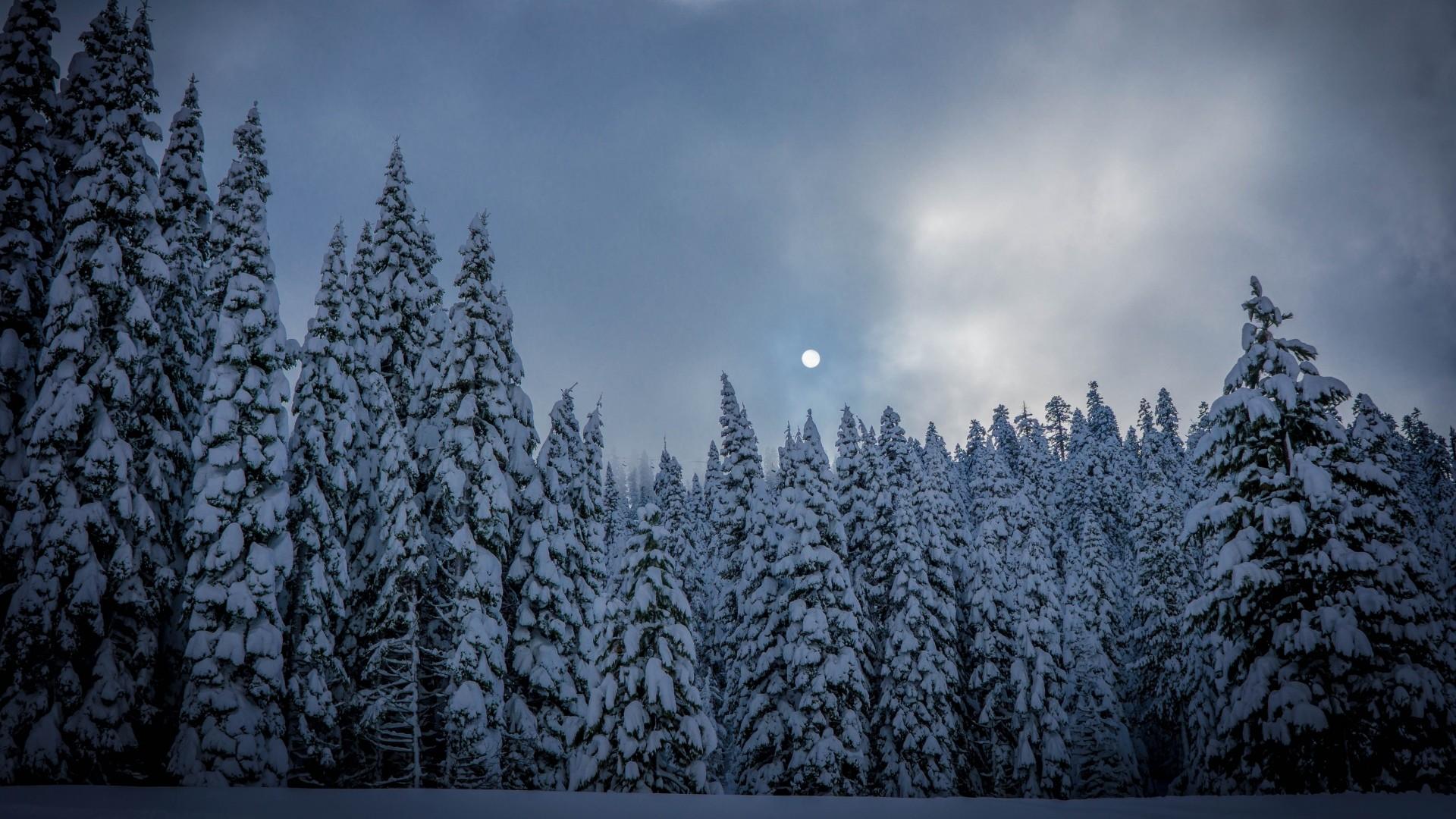 Preview wallpaper winter, fir, snow, forest 1920×1080