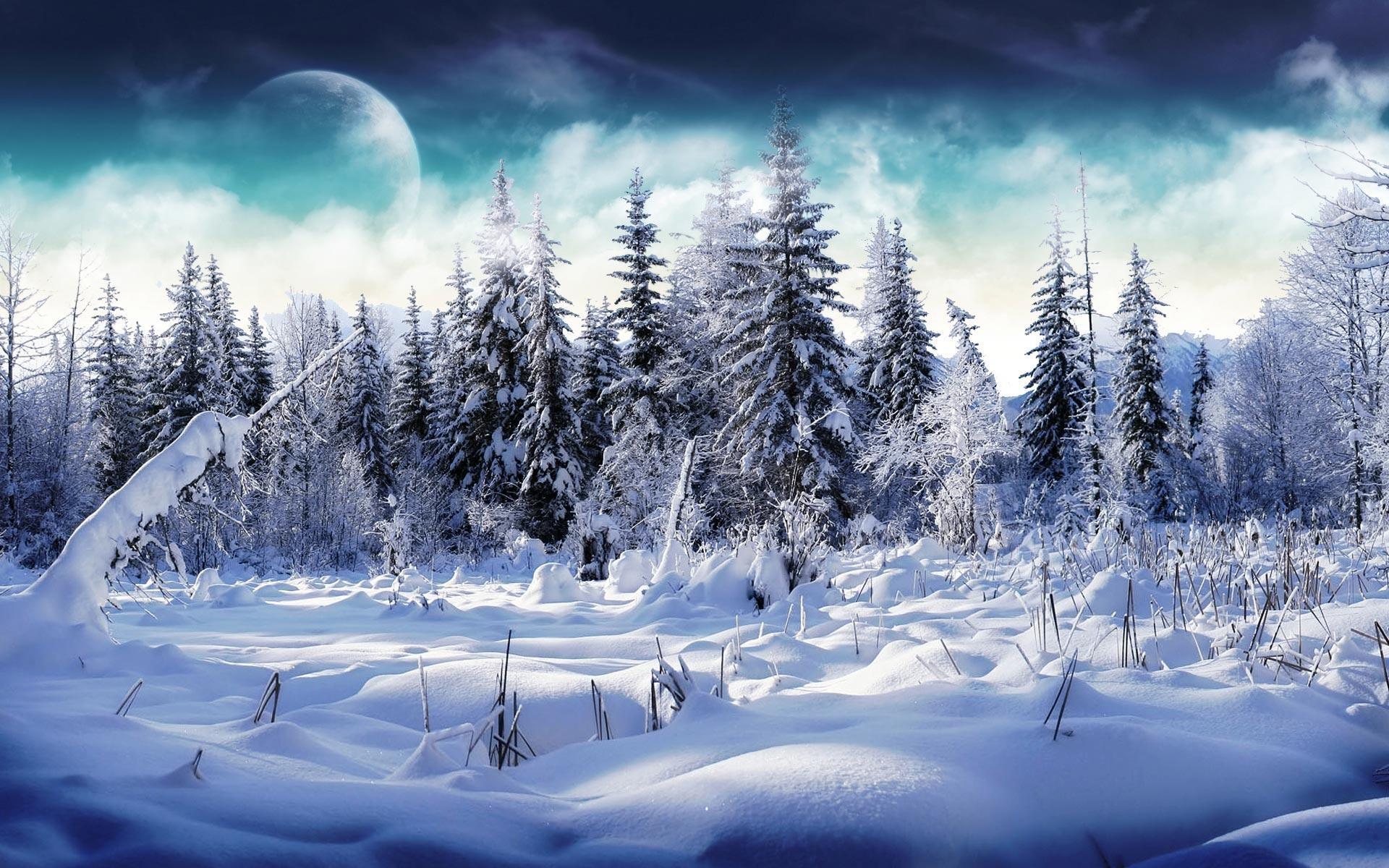 Desktop Wallpaper · Gallery · Nature · Winter Snowy forest   Free .