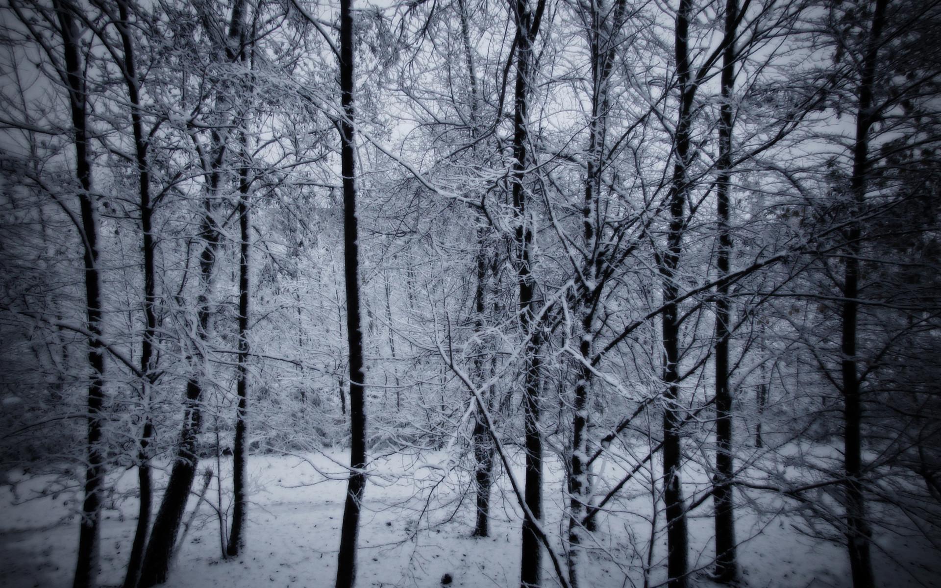 Pinterest · Download. « Snowy Forest HD Background Wallpaper