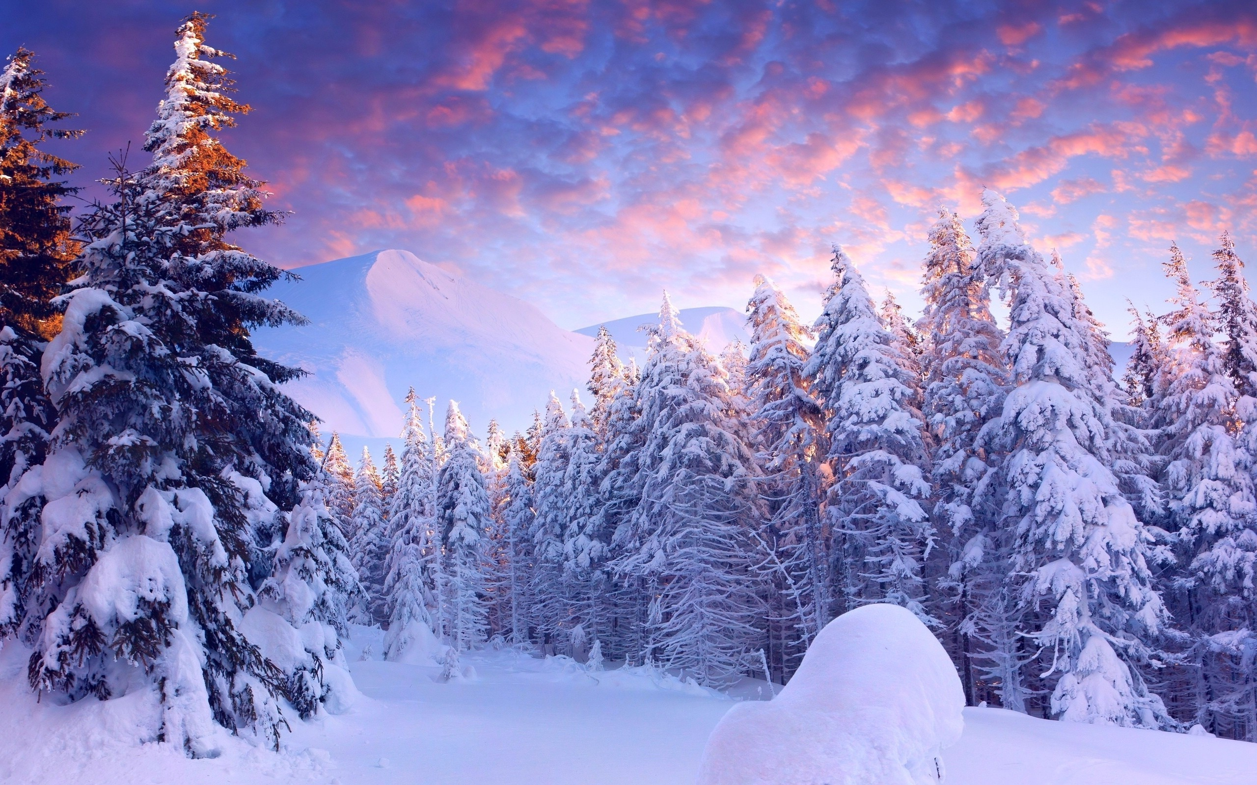 snow, Landscape, Trees Wallpapers HD / Desktop and Mobile Backgrounds