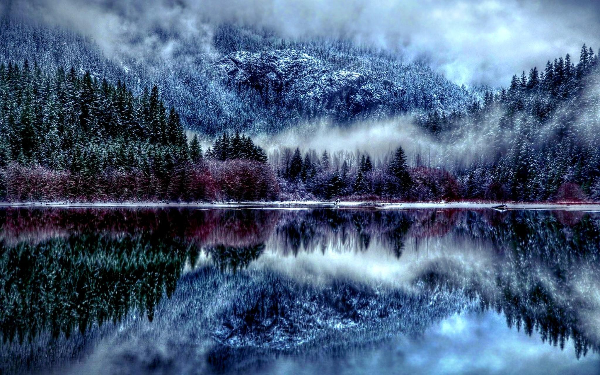 Winter Forest HD Wallpaper Season Desktop Wallpapers