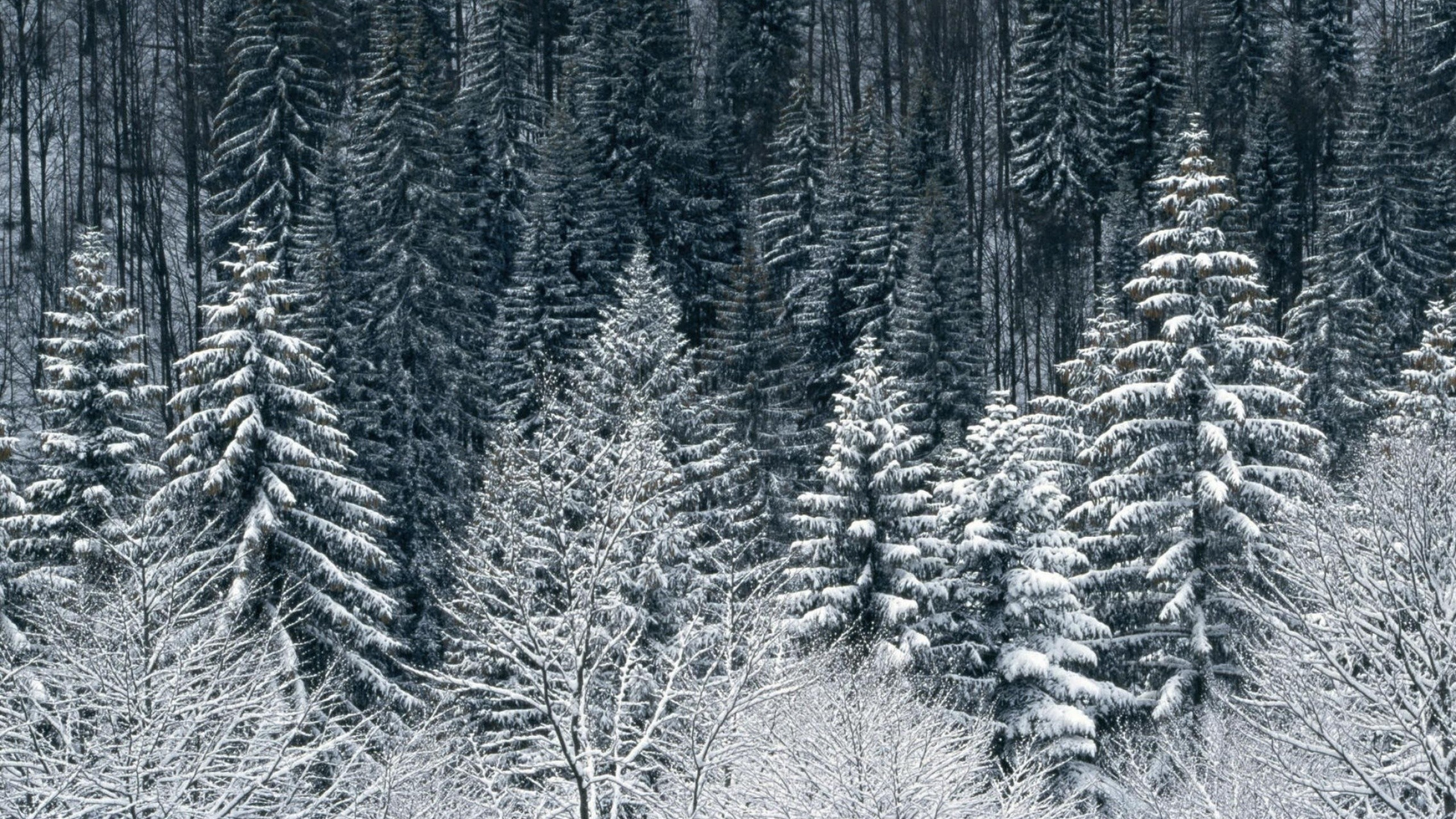 Snow Trees Forest desktop PC and Mac wallpaper