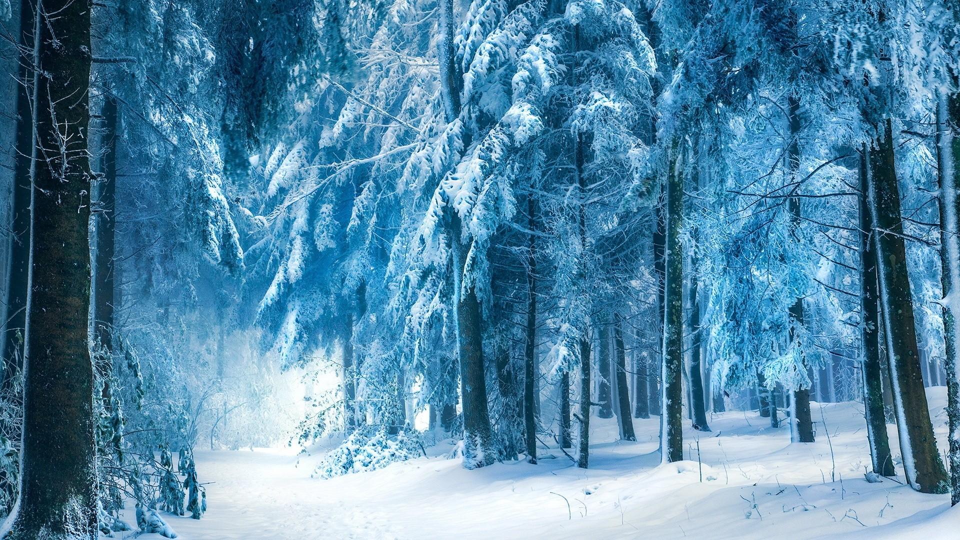 Dark Snowy Forest HD Desktop Wallpaper, Background Image