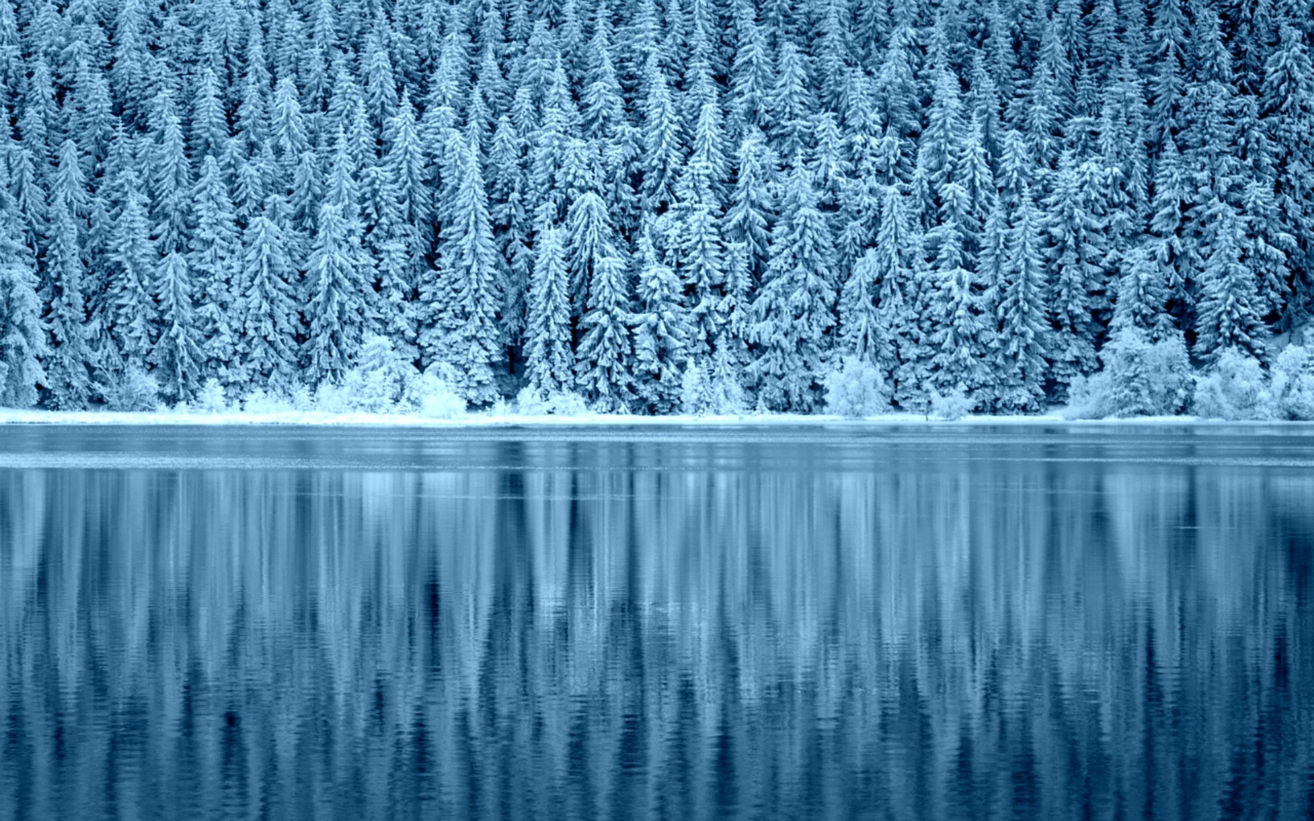 Snowy Forest Reflection