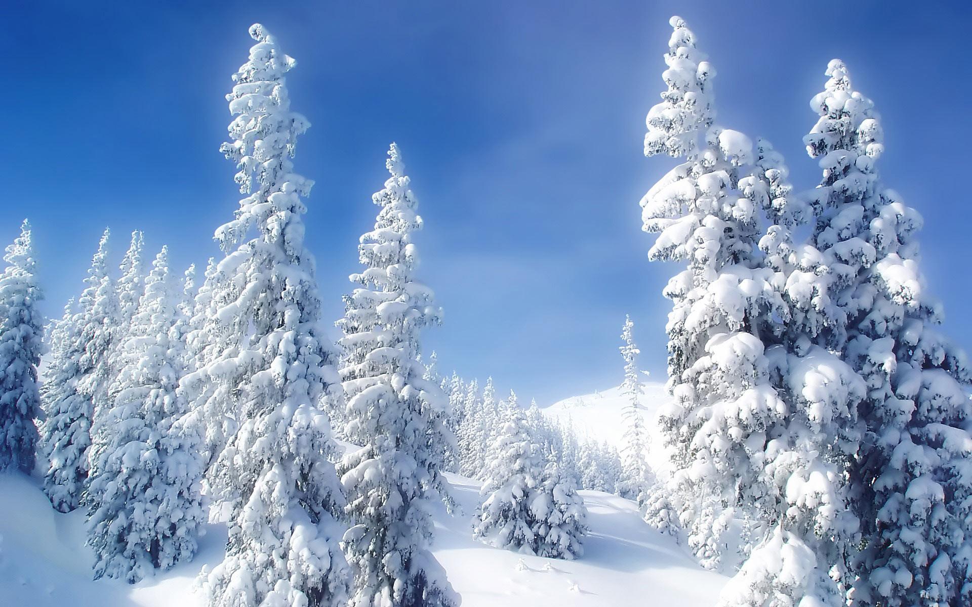 Mountain Snow Forest Desktop Wallpaper   WallpaperCow.com