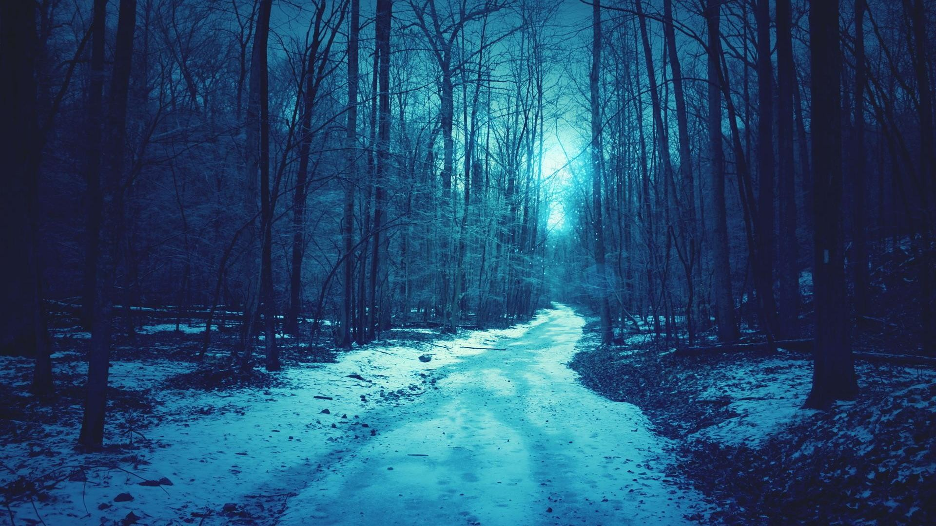 The winter snow forest Shallow blue backgrounds wide wallpapers :1280×800,1440×900,1680×1050
