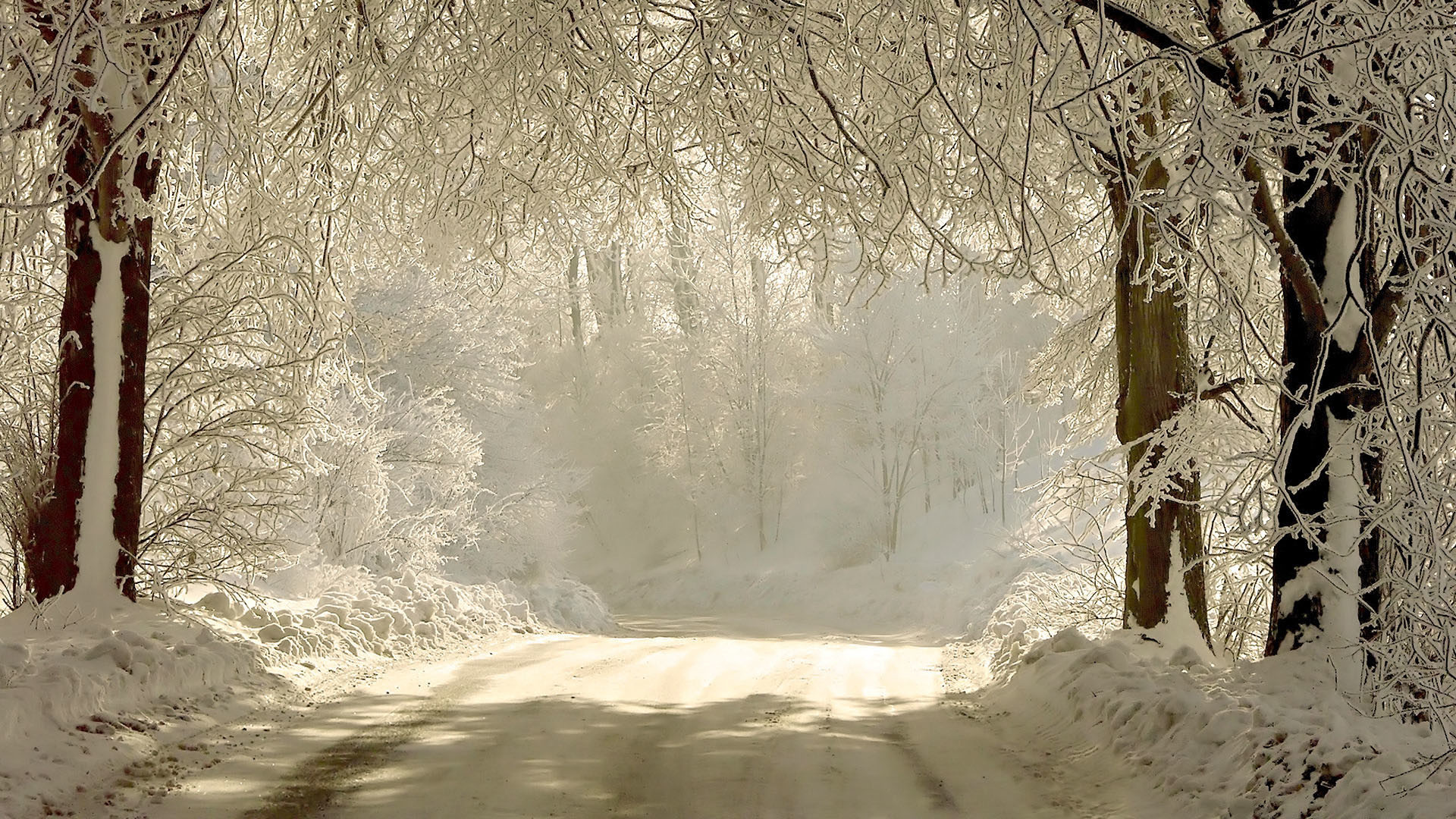 Snowy forest road. How to set wallpaper on your desktop? Click  the download link from above and set the wallpaper on the desktop from your  OS.