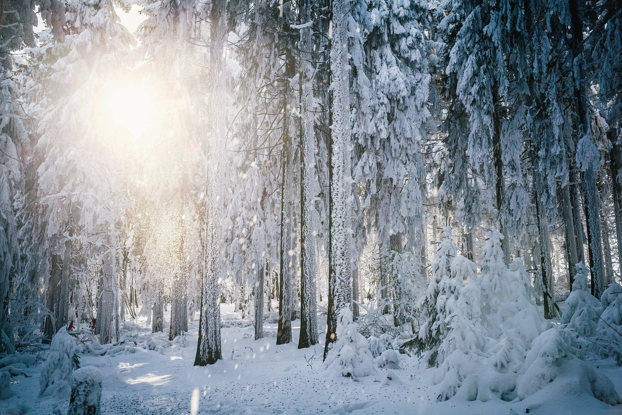 HD Sun Frost Winter Forest Trees Snow HD Background Wallpaper