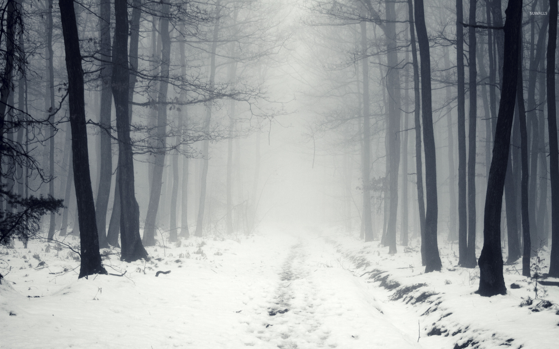 … snowy path in the foggy forest 2 wallpaper nature wallpapers …