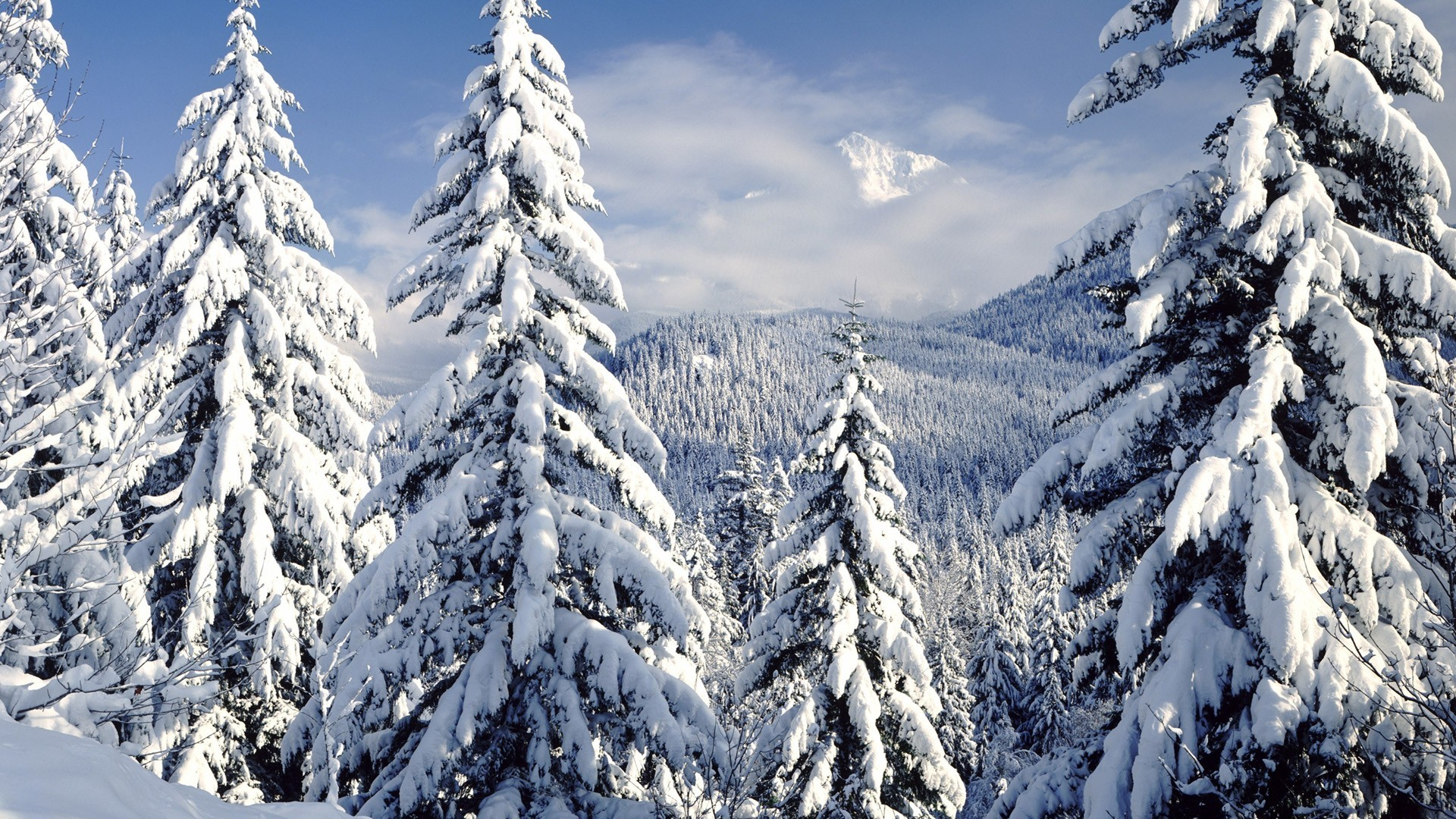 Tags: nature, winter …
