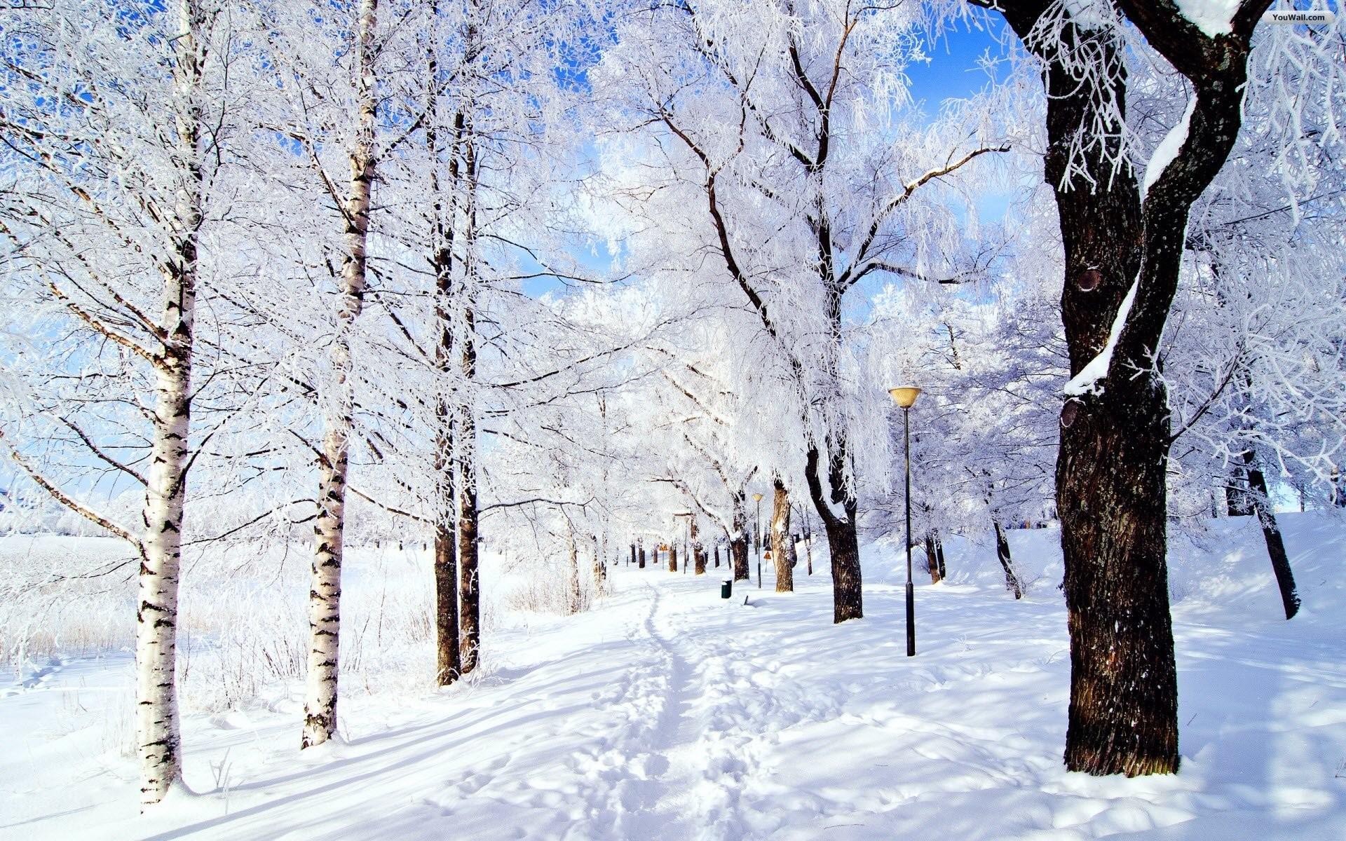 Snowy Park Wallpaper