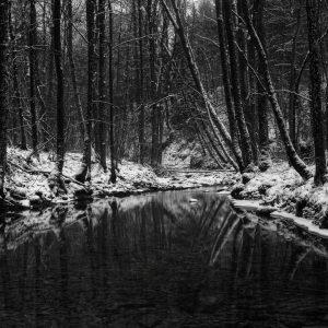 Snowy Forest Desktop
