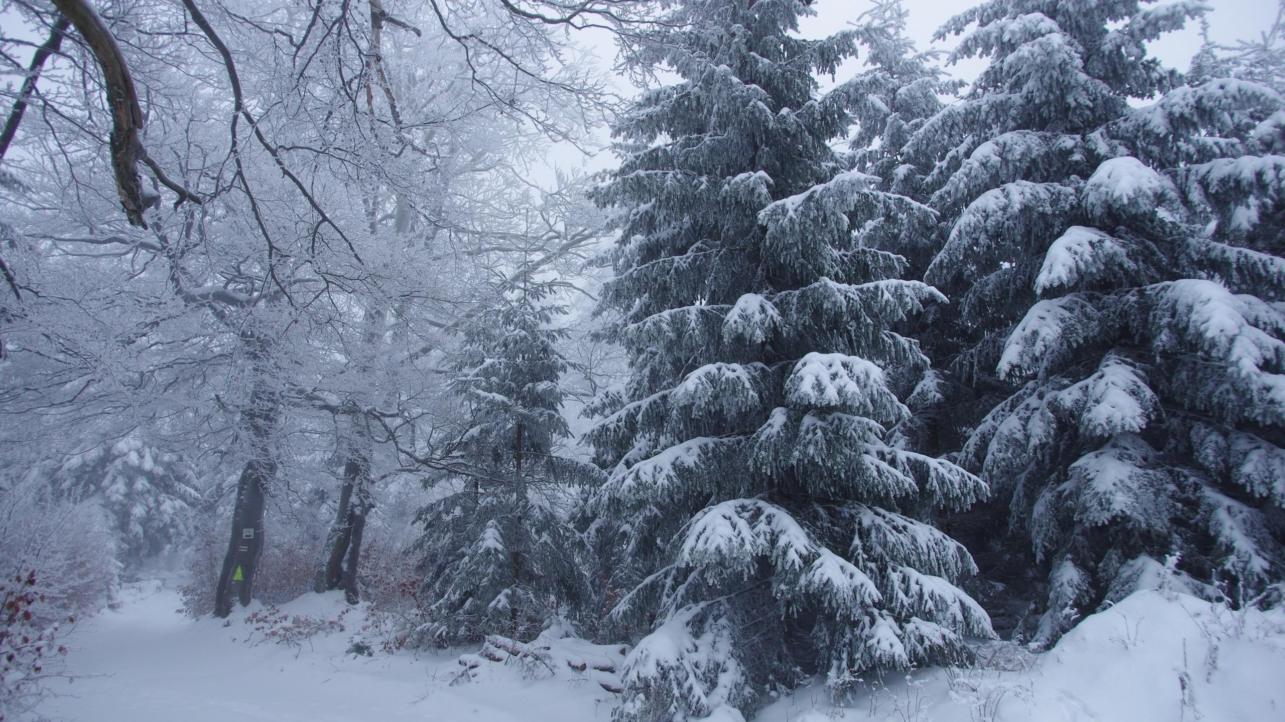 Winter Forest Photos