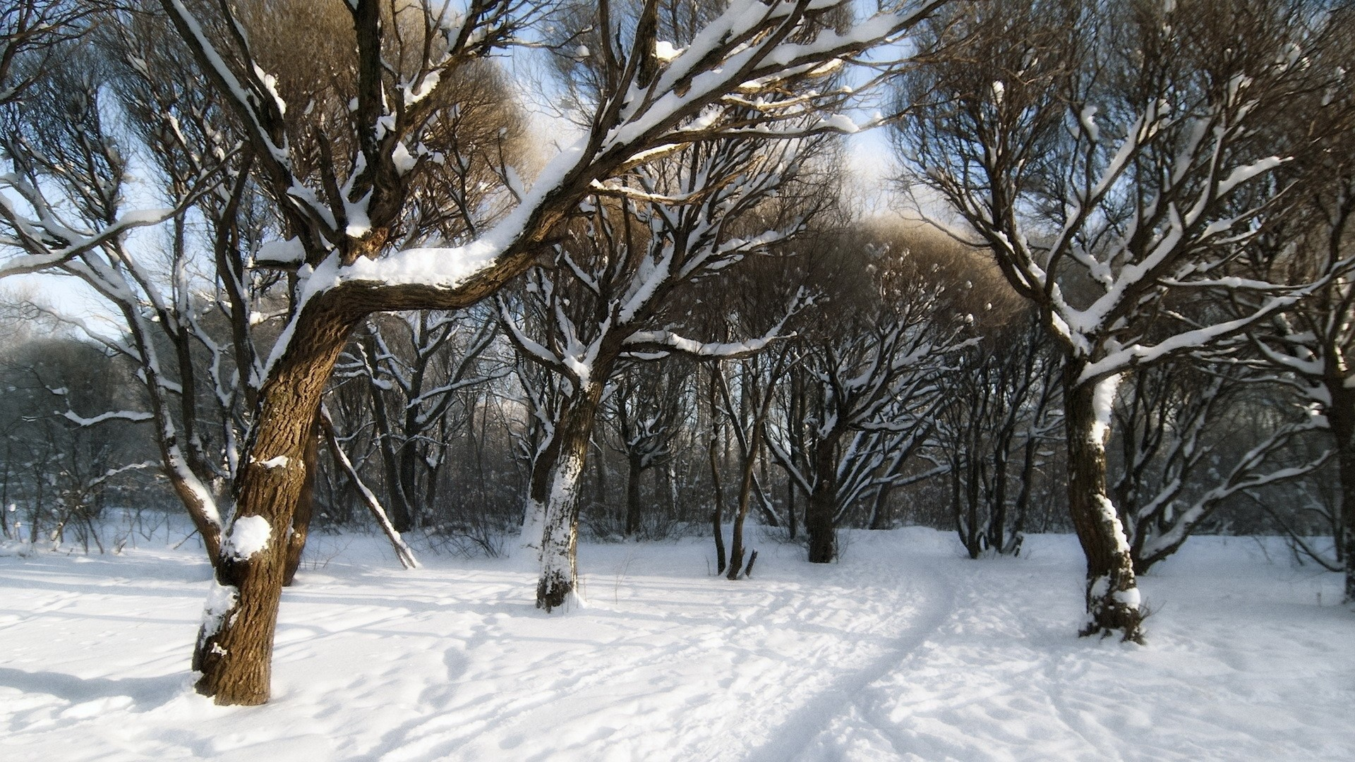 Snowy Forest. How to set wallpaper on your desktop? Click the  download link from above and set the wallpaper on the desktop from your OS.
