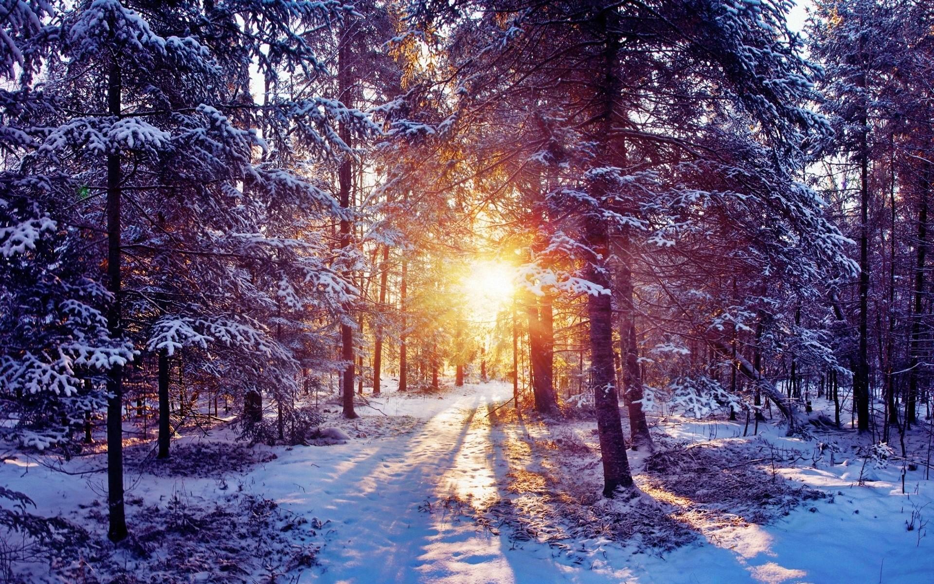 Wallpaper sun, light, trees, forest, bush, snow