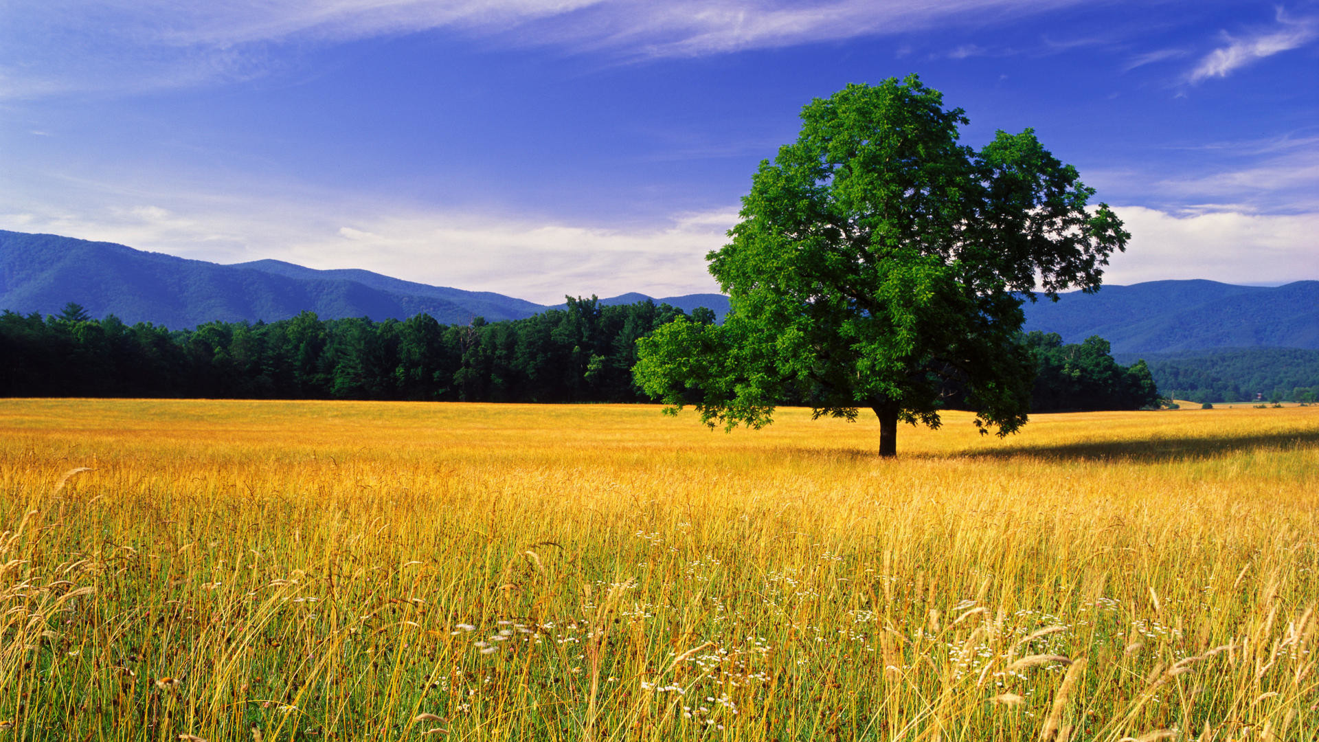 Landscape HD Wallpapers Free Dowload