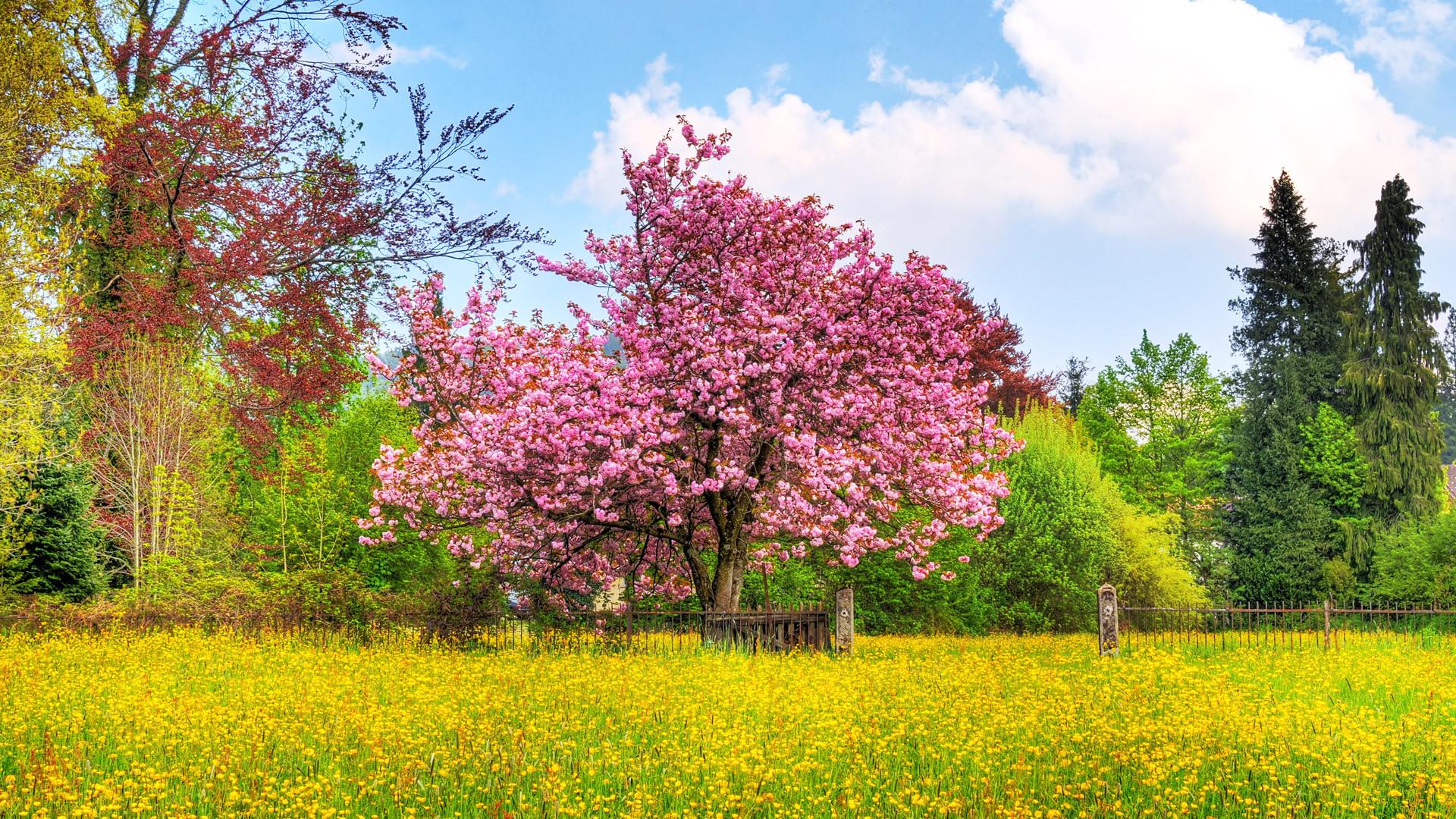 HD 1080p Wallpaper Nature.