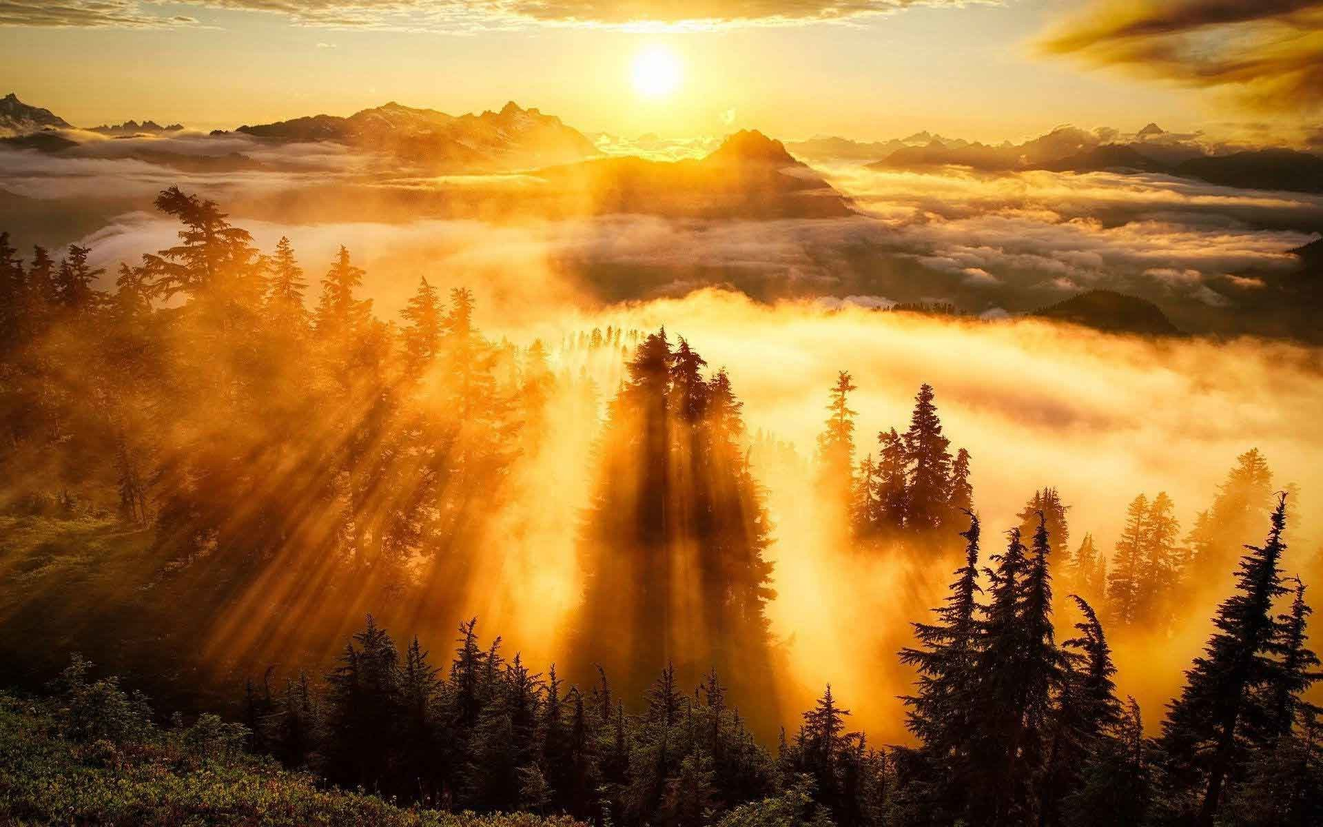 Sunrise Sunset Landscape Trees Autumn Forest Nature Tree HD Wallpapers 1080p  Widescreen Download