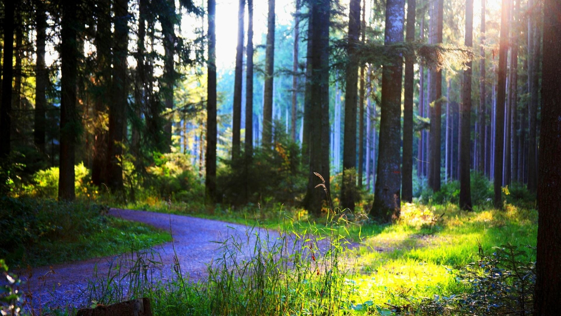 Tree Landscape Forest Nature Trees Hd Wallpapers 1080p 3d Detail