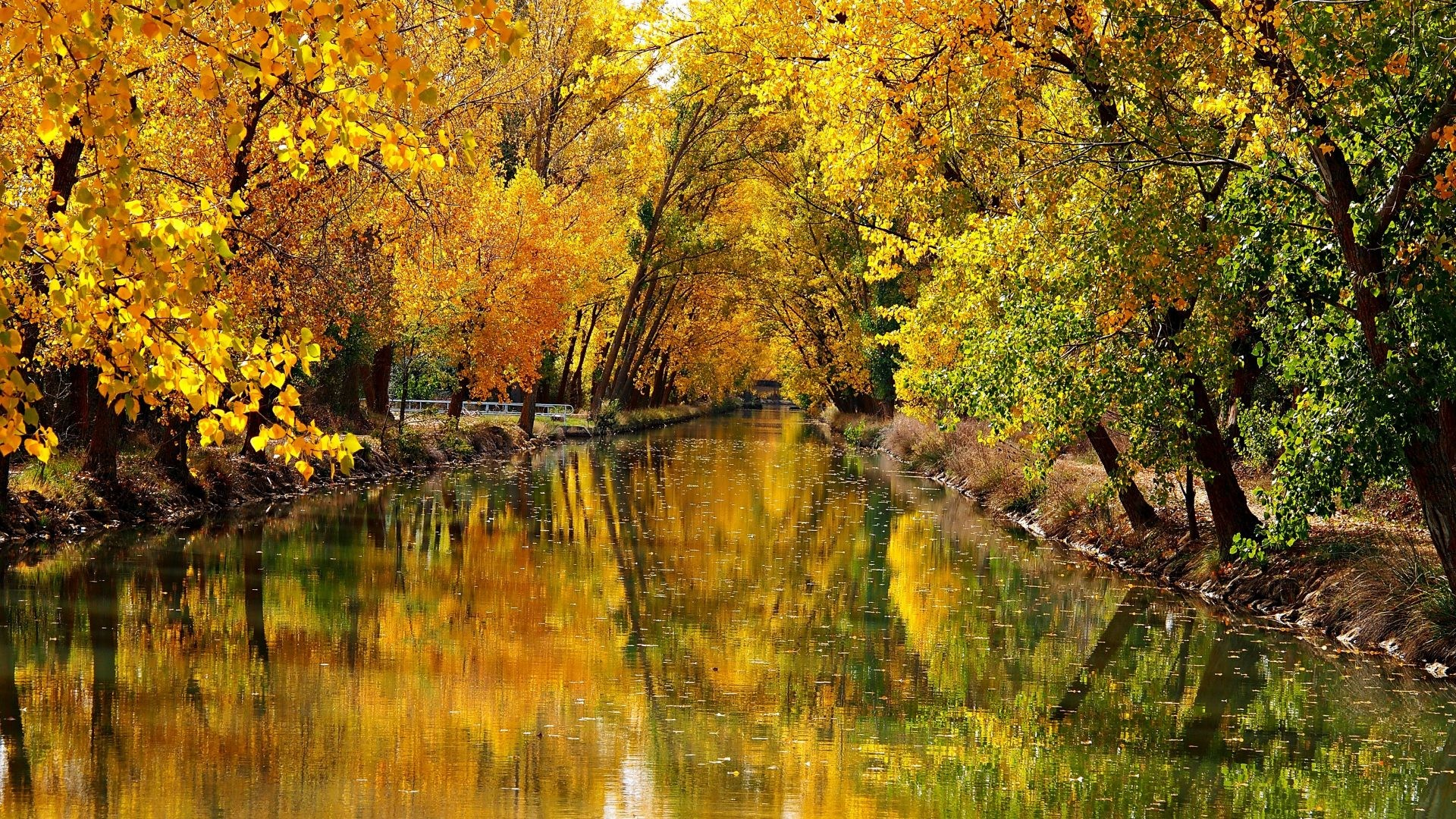 Landscape Tag – Leaf Leaves Fall Tree Nature Forest Autumn Landscape Hd  Photo Free for HD