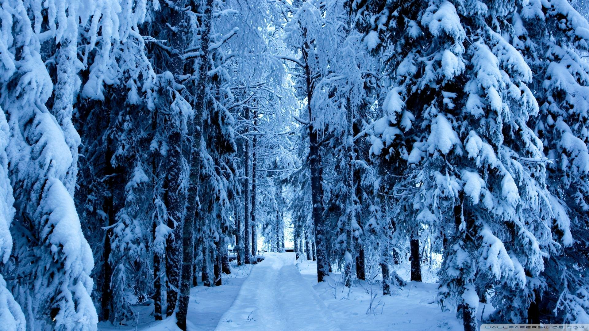 Wallpapers For > Snowy Forest Backgrounds