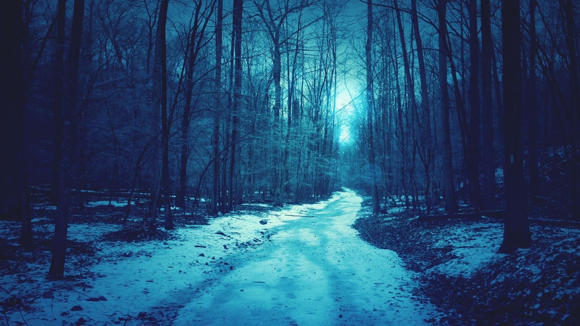 backgrounds, winter, shallow, blue, background, forest, snow, desktop .