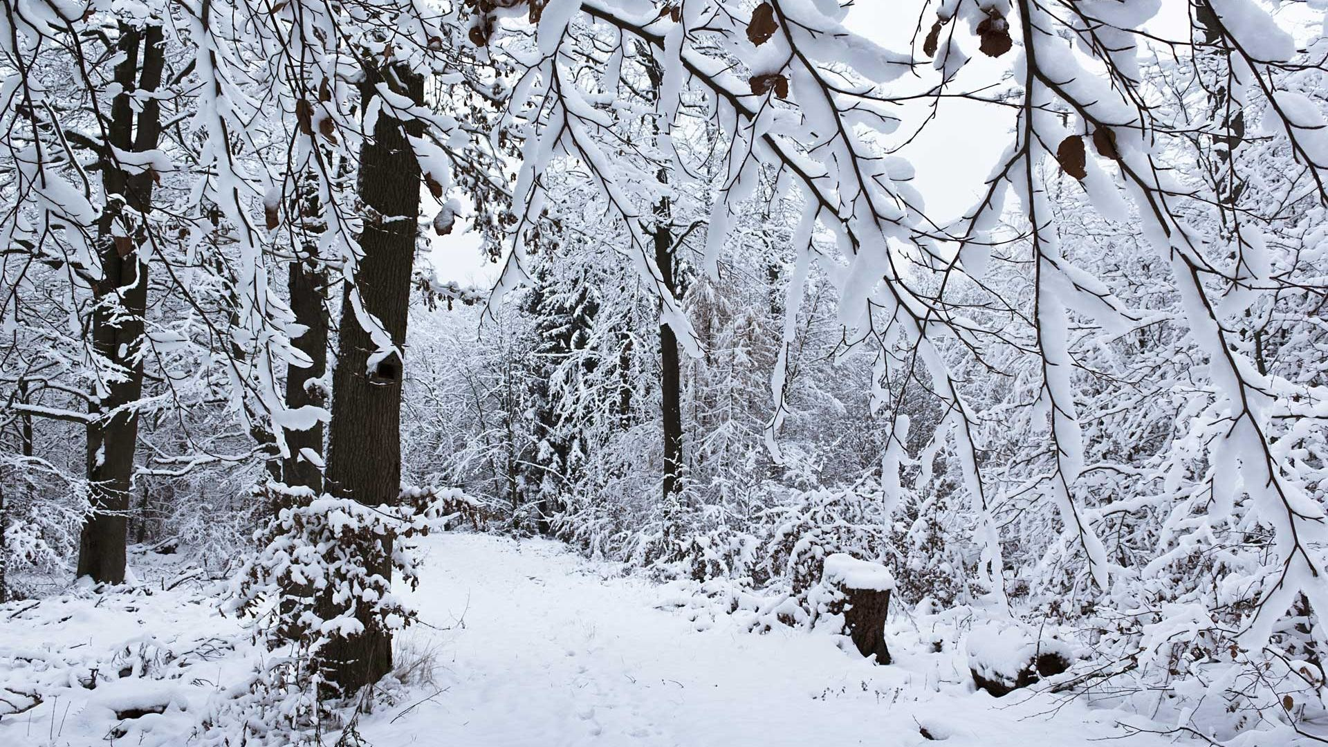 Hd Winter snow of trees scenery backgrounds wide wallpapers :1280×800,1440×900,1680×1050