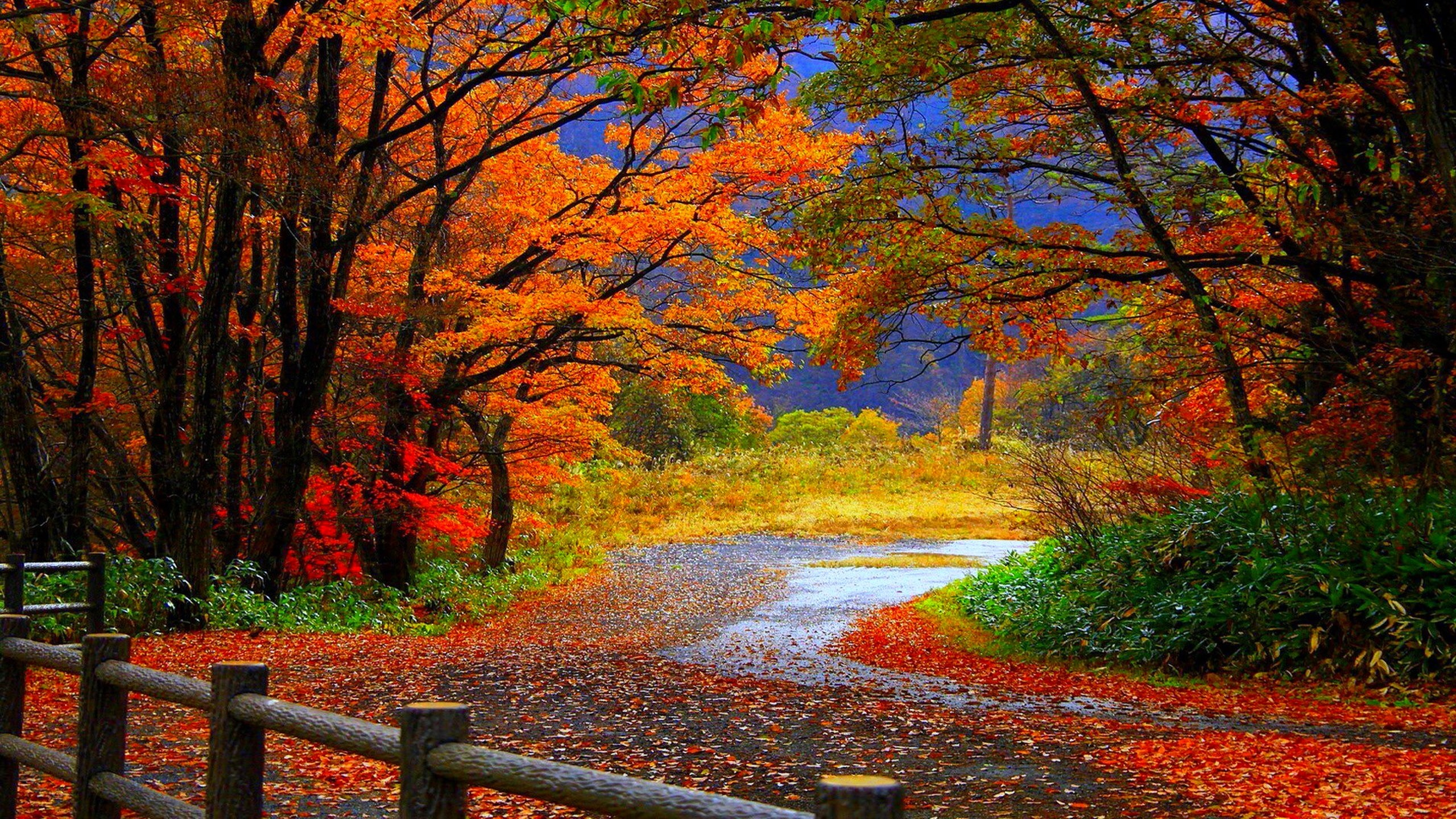 Fall Wallpaper High Definition