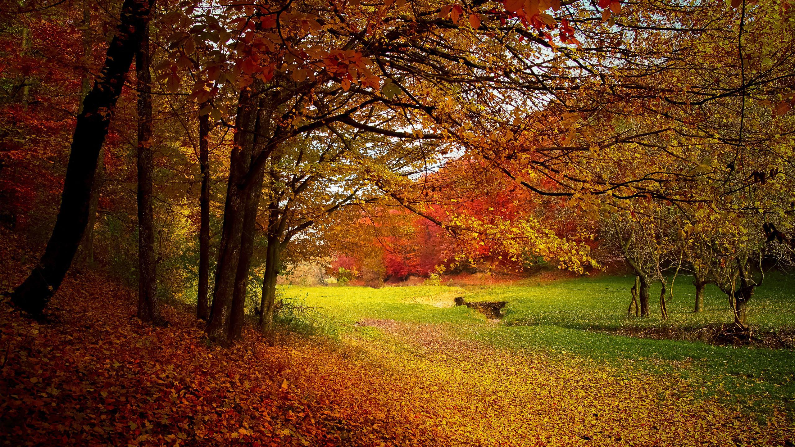 Colorful Autumn Season Wallpaper Free Download HD Wallpapers