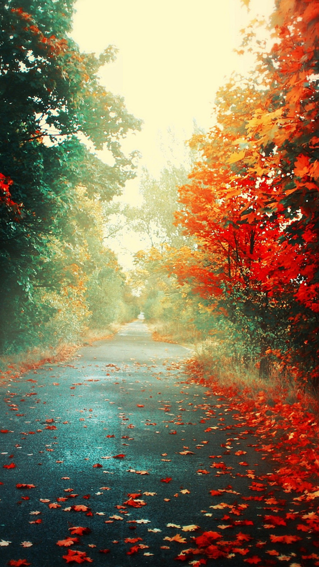Nature Autumn Red Maple Leafy Road #iPhone #7 #wallpaper