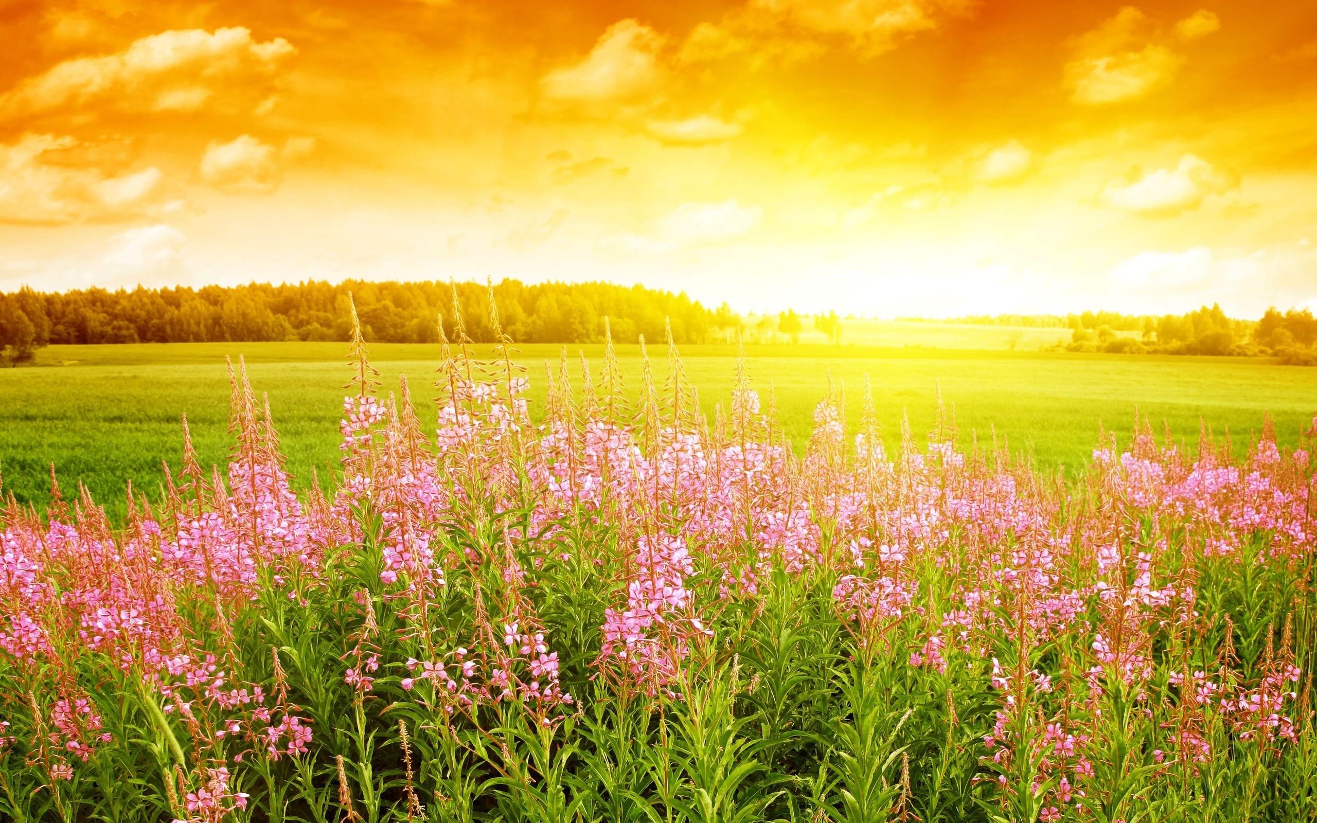 Spring HD Desktop Wallpaper.