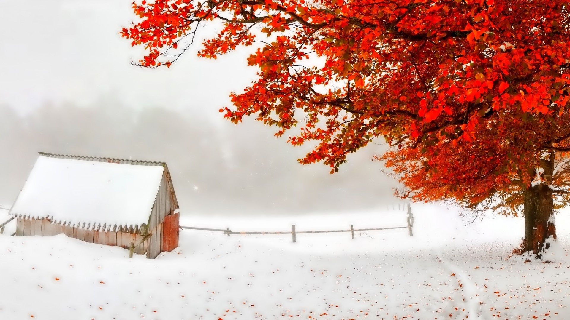 Storm Shack Tree Red Snow Leaves Early Autumn Countryside Winter Wallpaper  For Desktop Background Detail