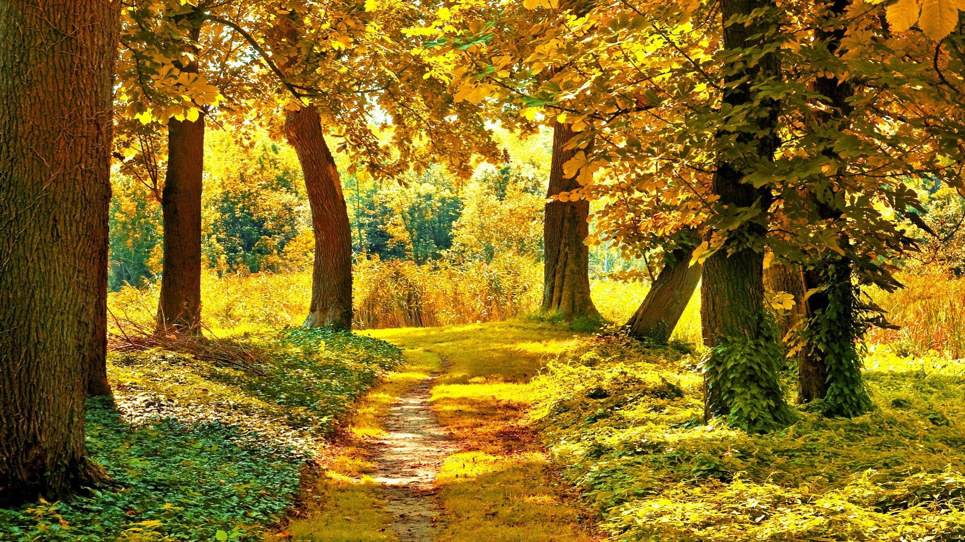 21+ Best HD Autumn Landscape Wallpapers | feelgrPH · Landscape  WallpaperWallpaper Desktop