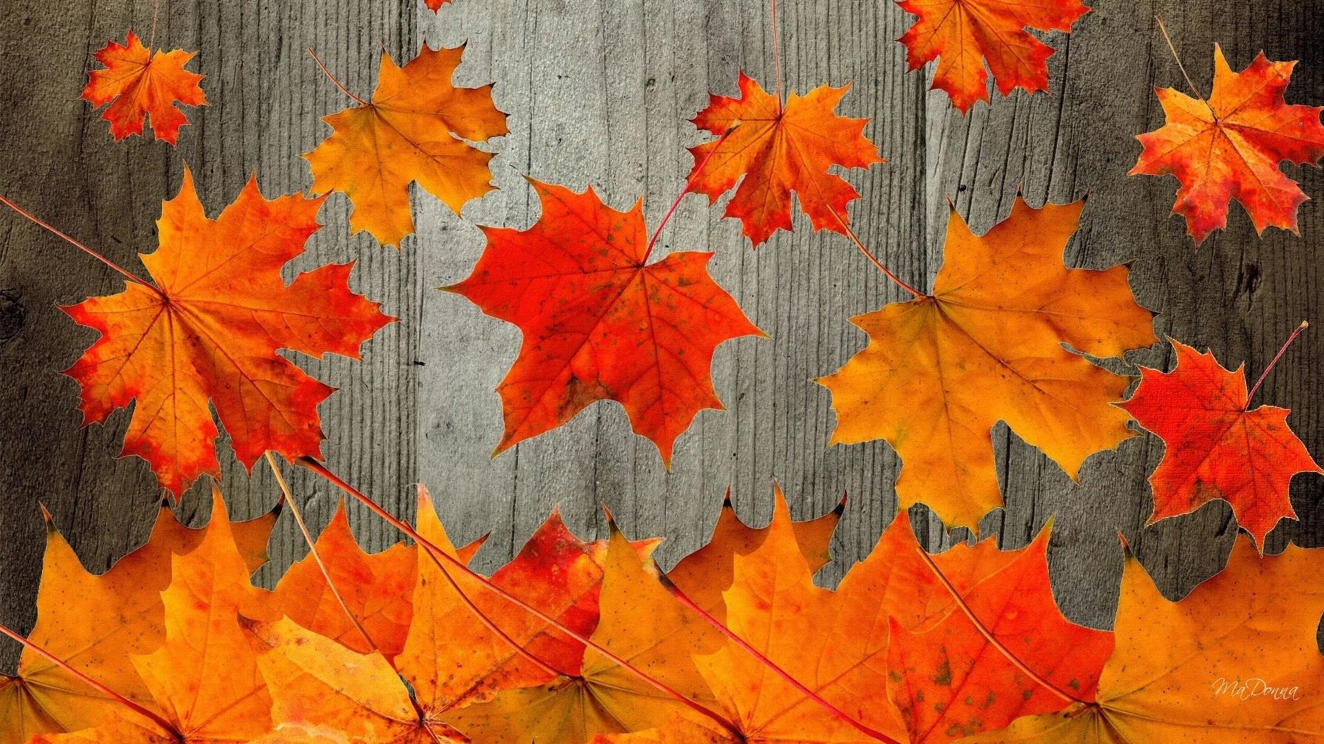 9. free-fall-wallpapers-for-desktop9-600×338