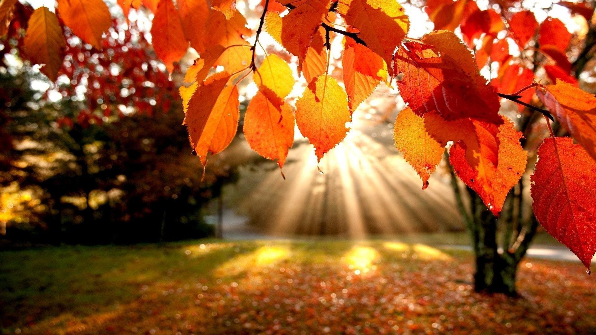 Image: Fall Leaves Desktop Wallpaper