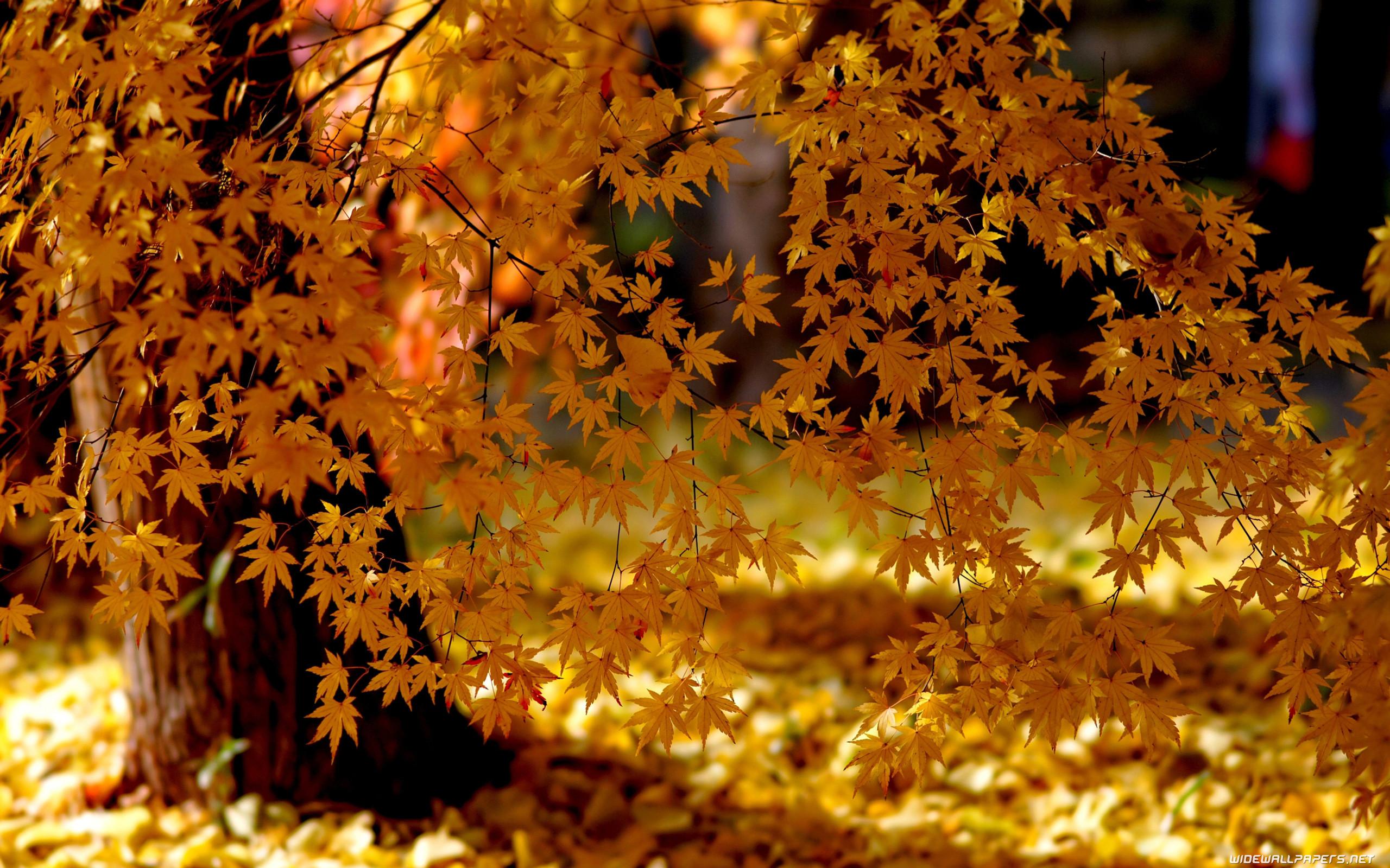Autumn 2560×1440 3840×2160