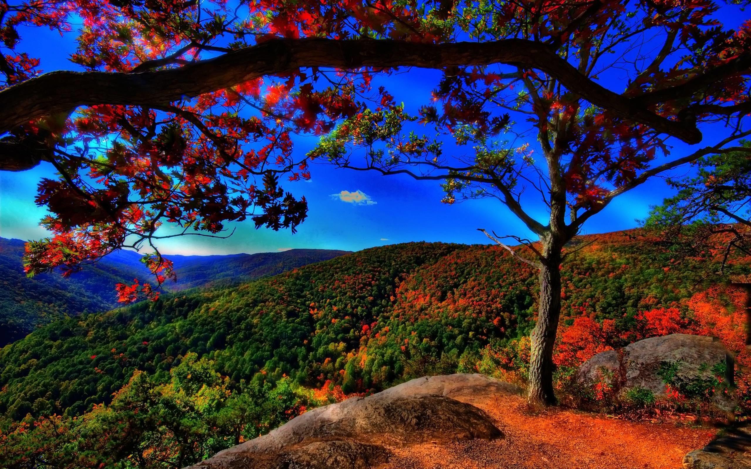 Desktop : Fall Wallpaper Free Com 1600x2560px Fall Wallpaper. Fall .
