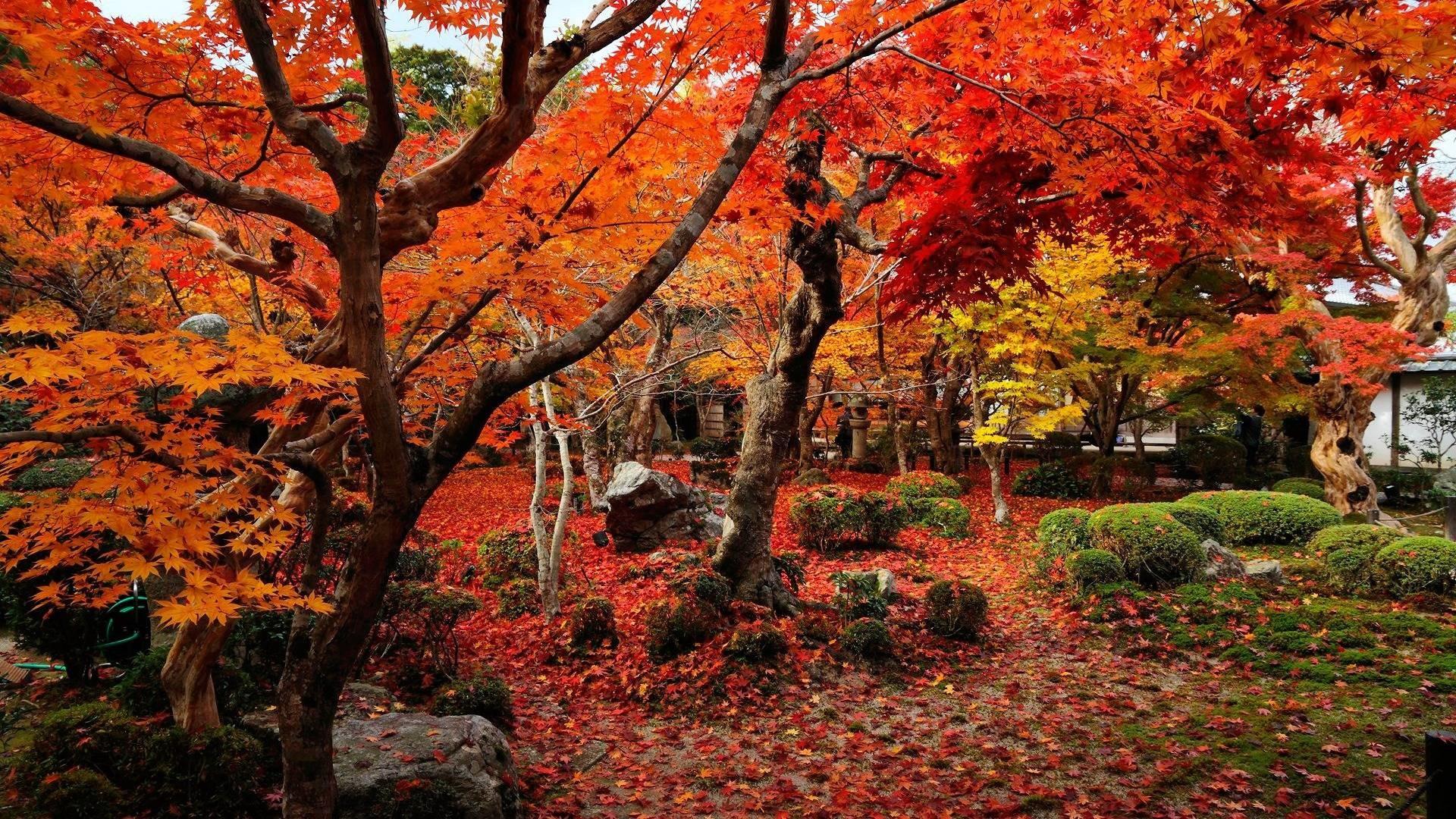 Wallpaper autumn wallpapers temple enkoji colorful world .