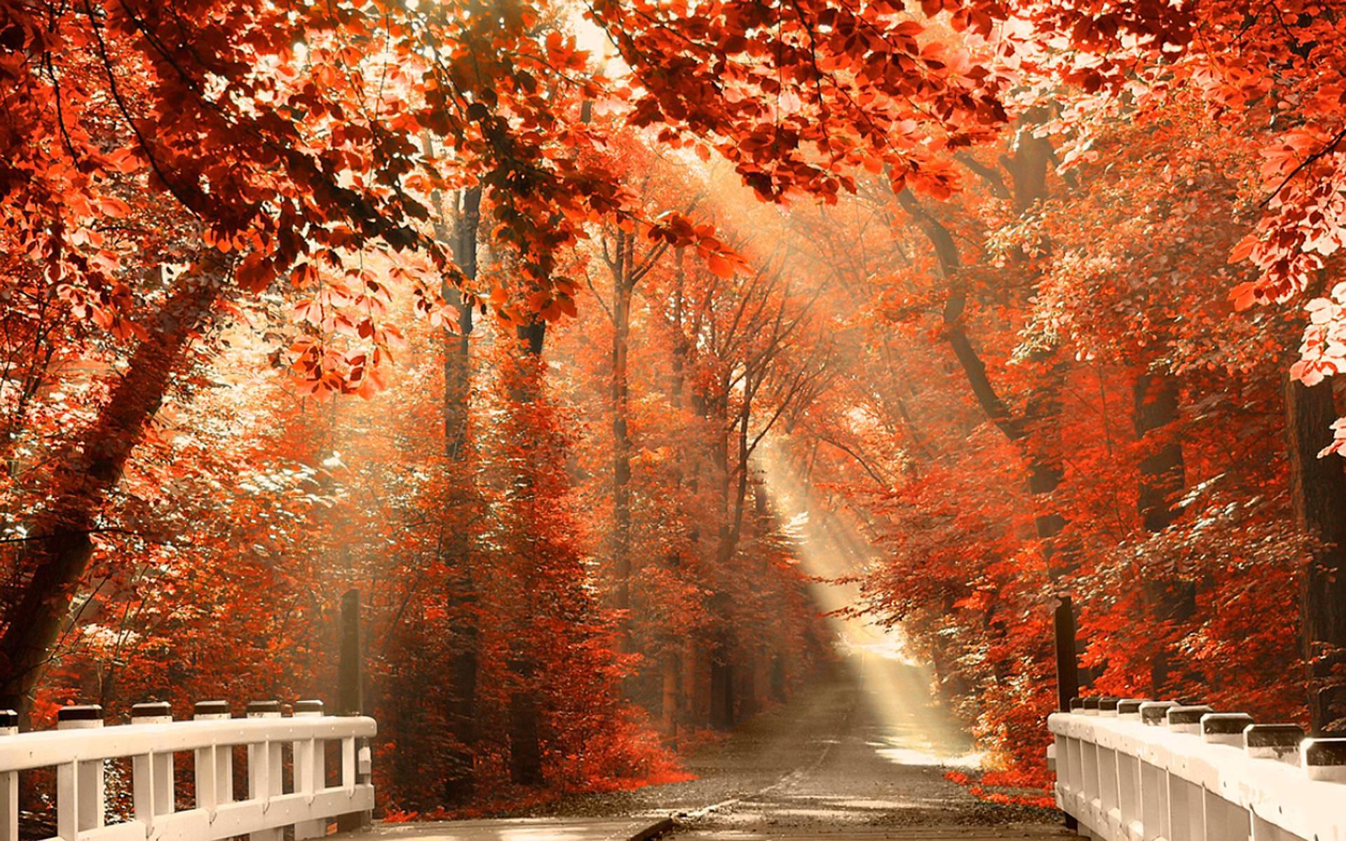 Autumn Nature Wallpaper Desktop Pictures 5 HD Wallpapers | Eakai.