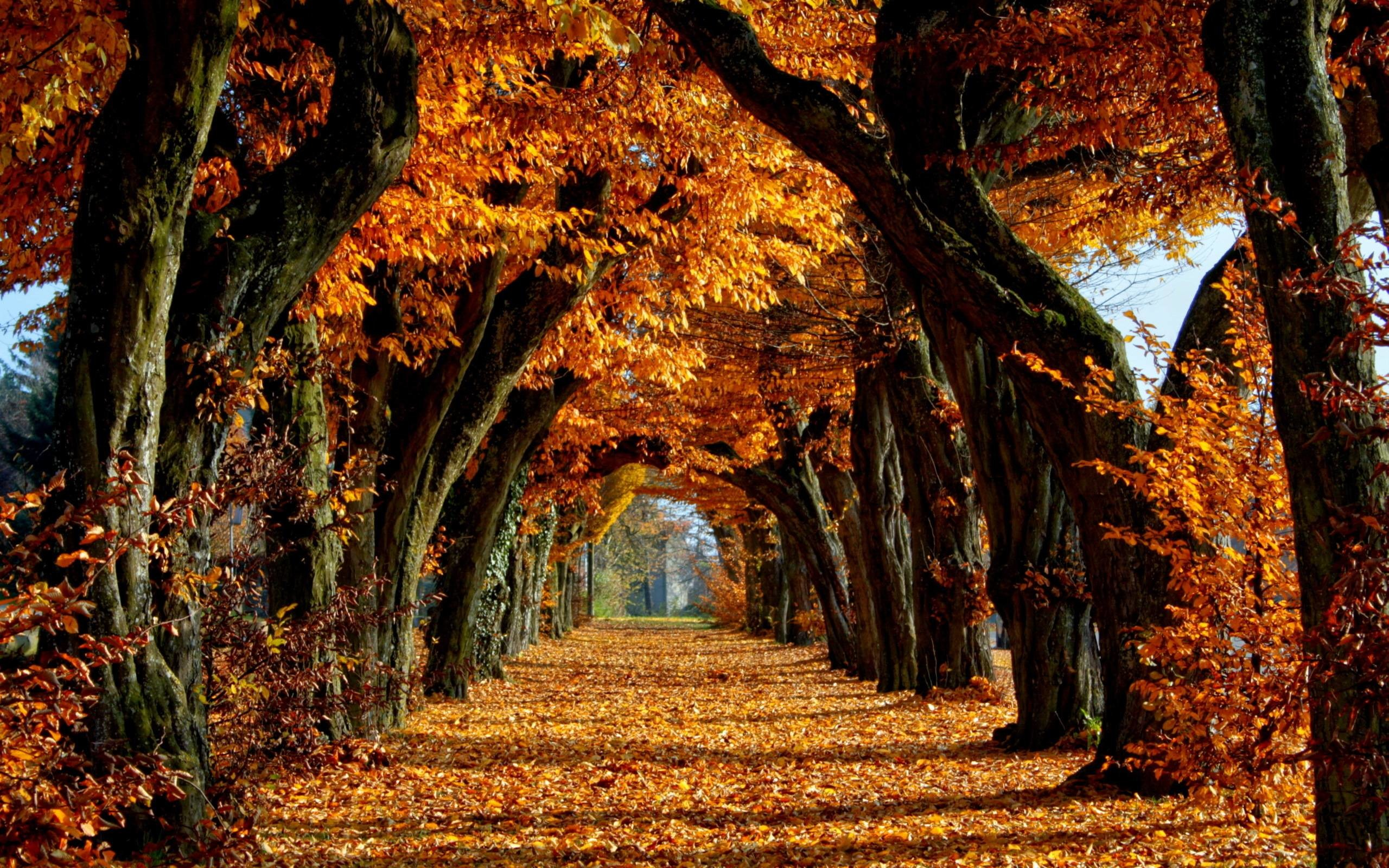 Wallpapers For > Fall Leaves Desktop Backgrounds