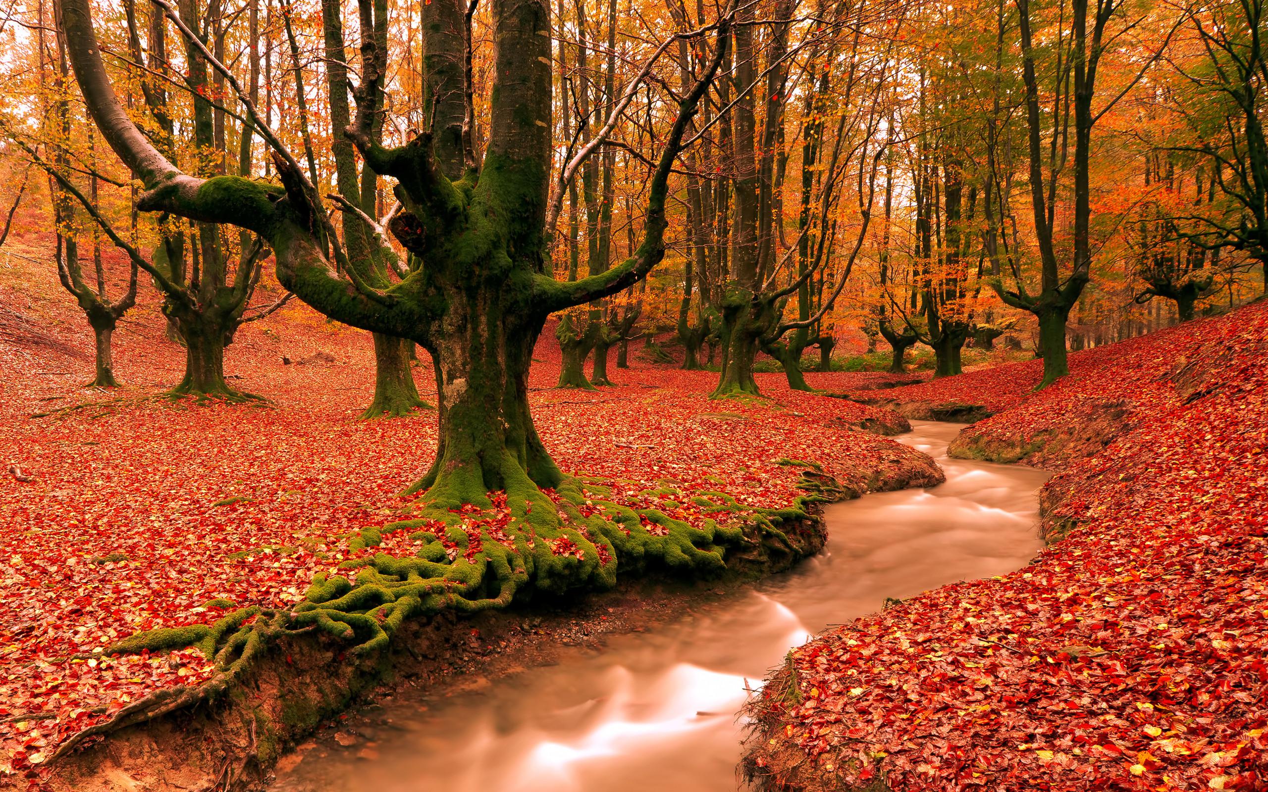 /images-of-autumn-desktop-wallpapers-free-