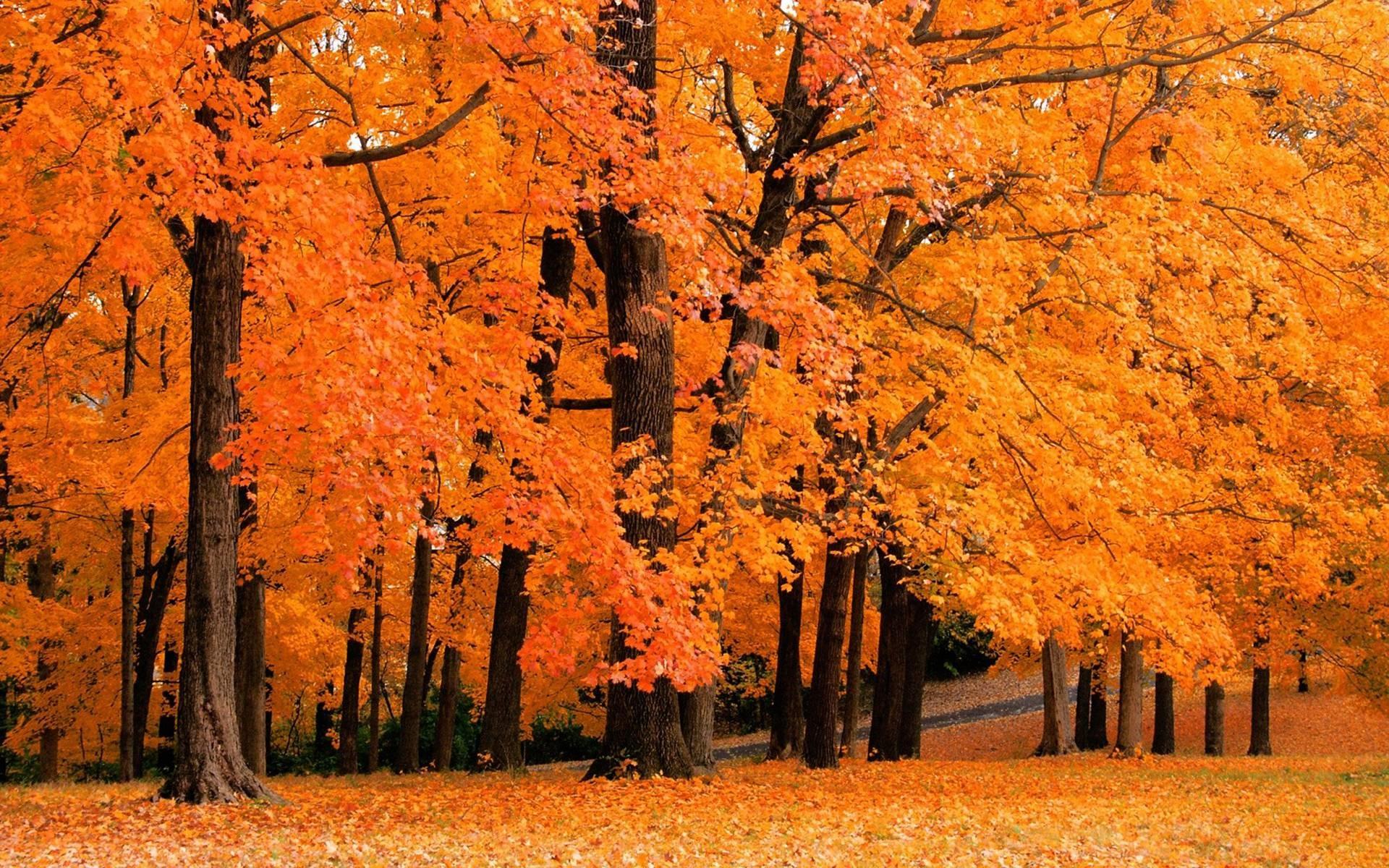 fall desktop background – fall leaves desktop background | Desktop .