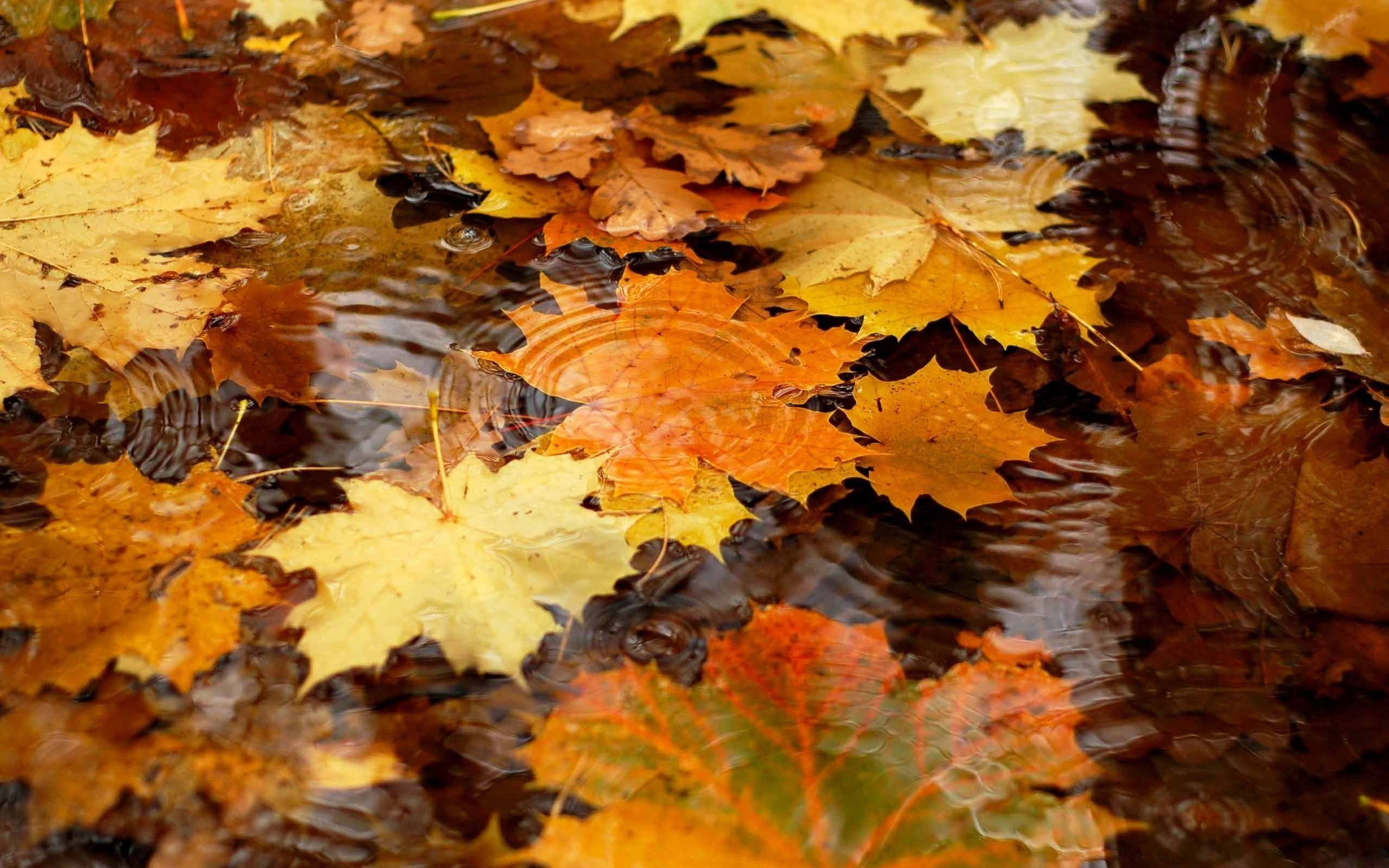 Fall Computer Wallpapers Free – Wallpaper Cave