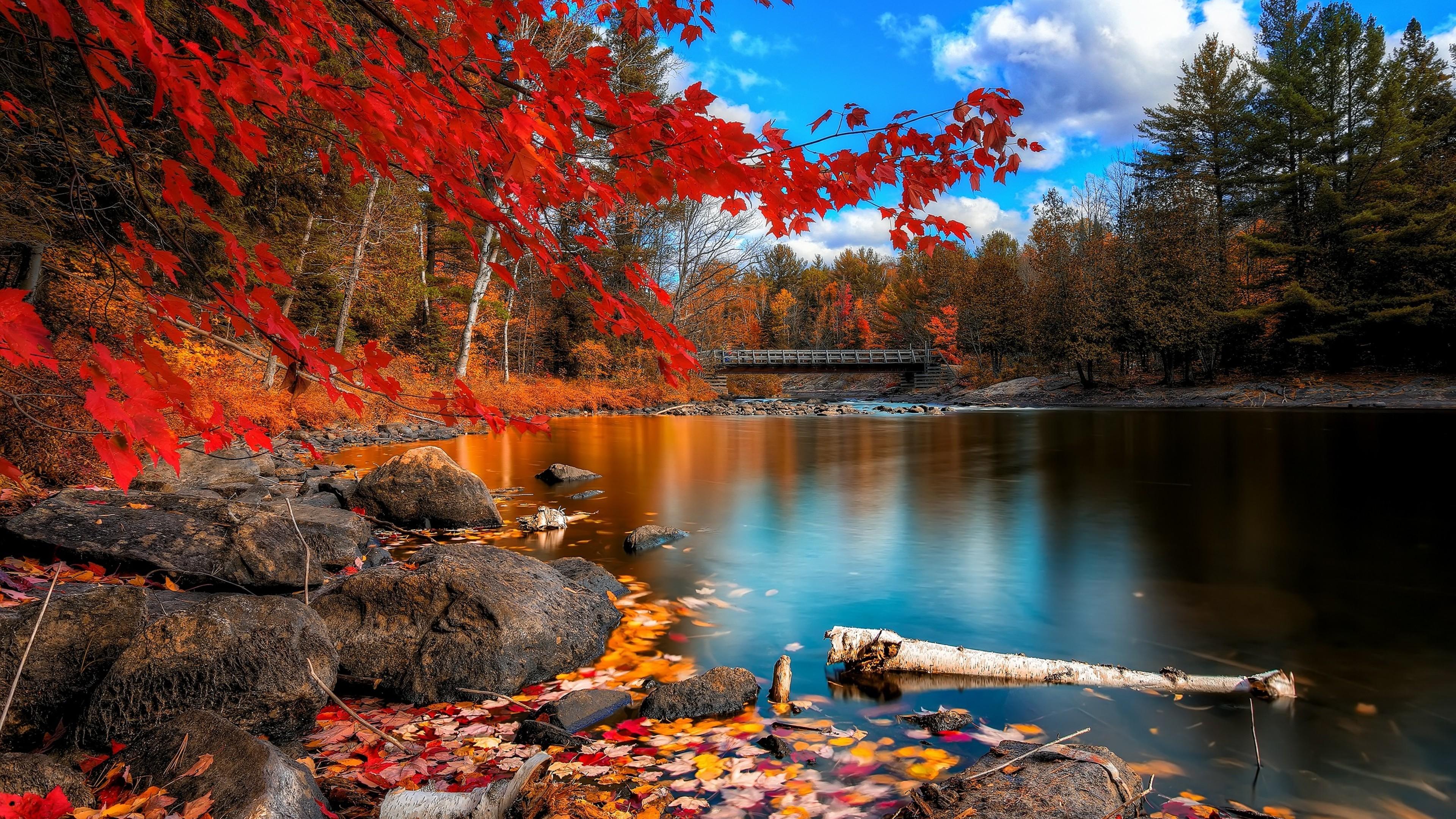 wallpaper.wiki-HD-Fall-Foliage-Picture-PIC-WPE008843