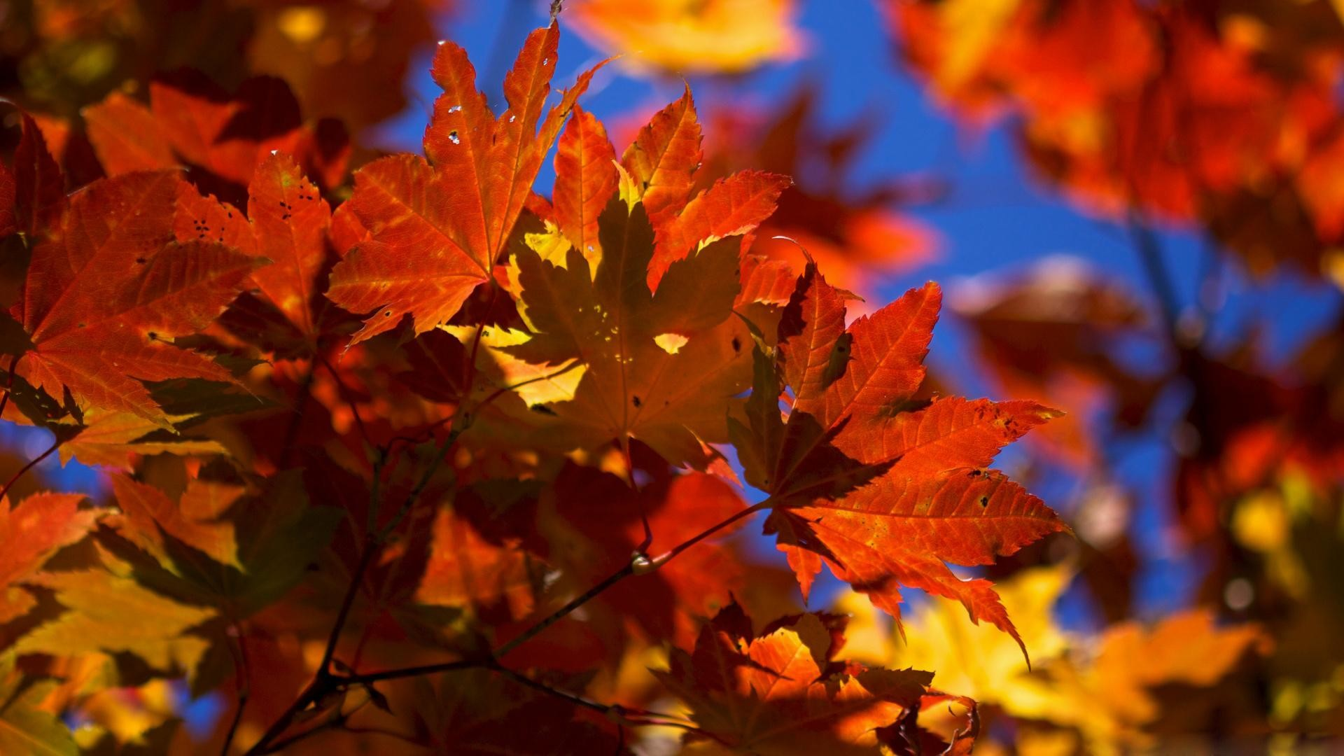 Pictures-Fall-leaves-desktop-wallpapers