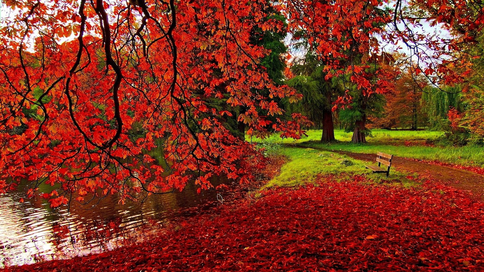 Park Autumn Wallpaper