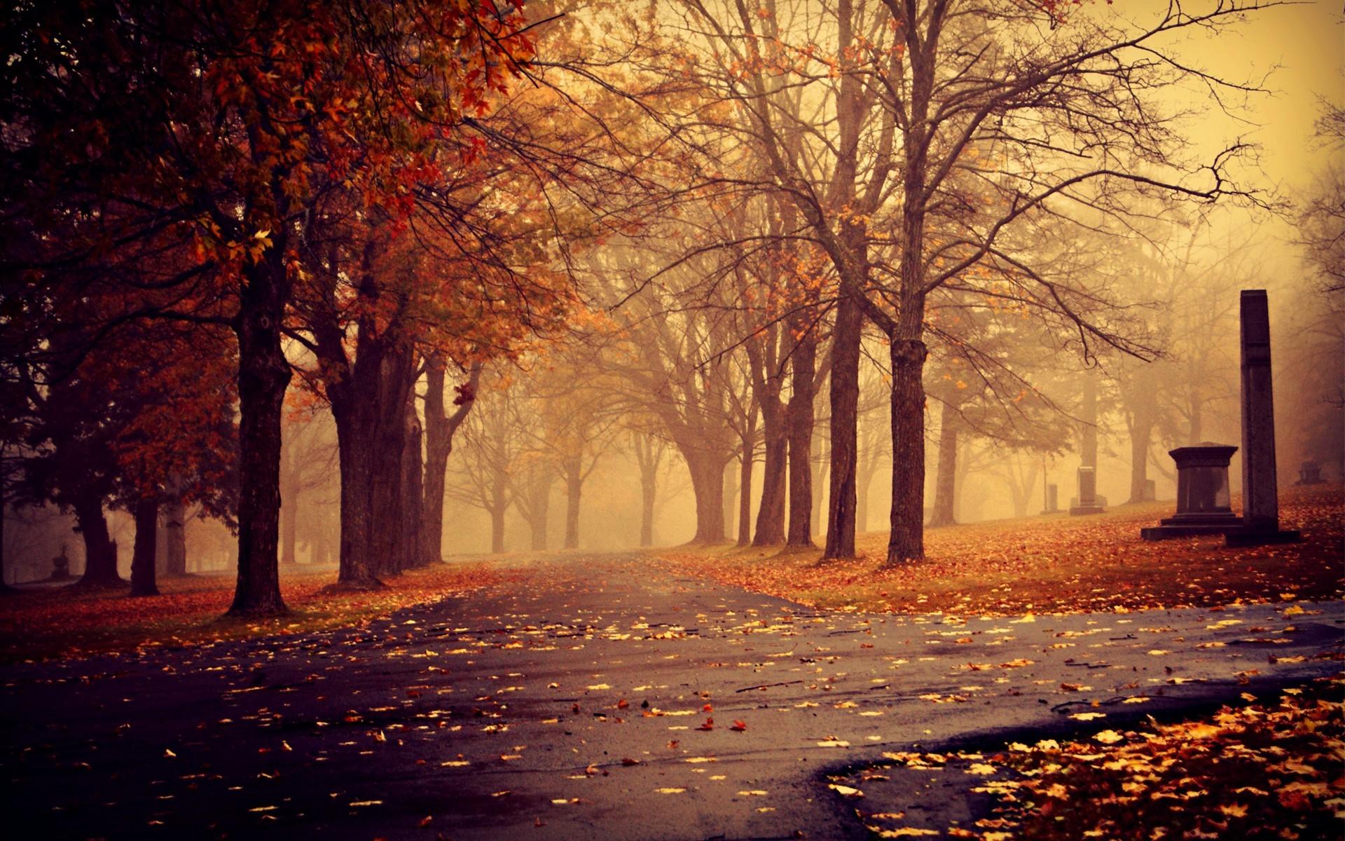 foggy autumn desktop wallpapers -#main