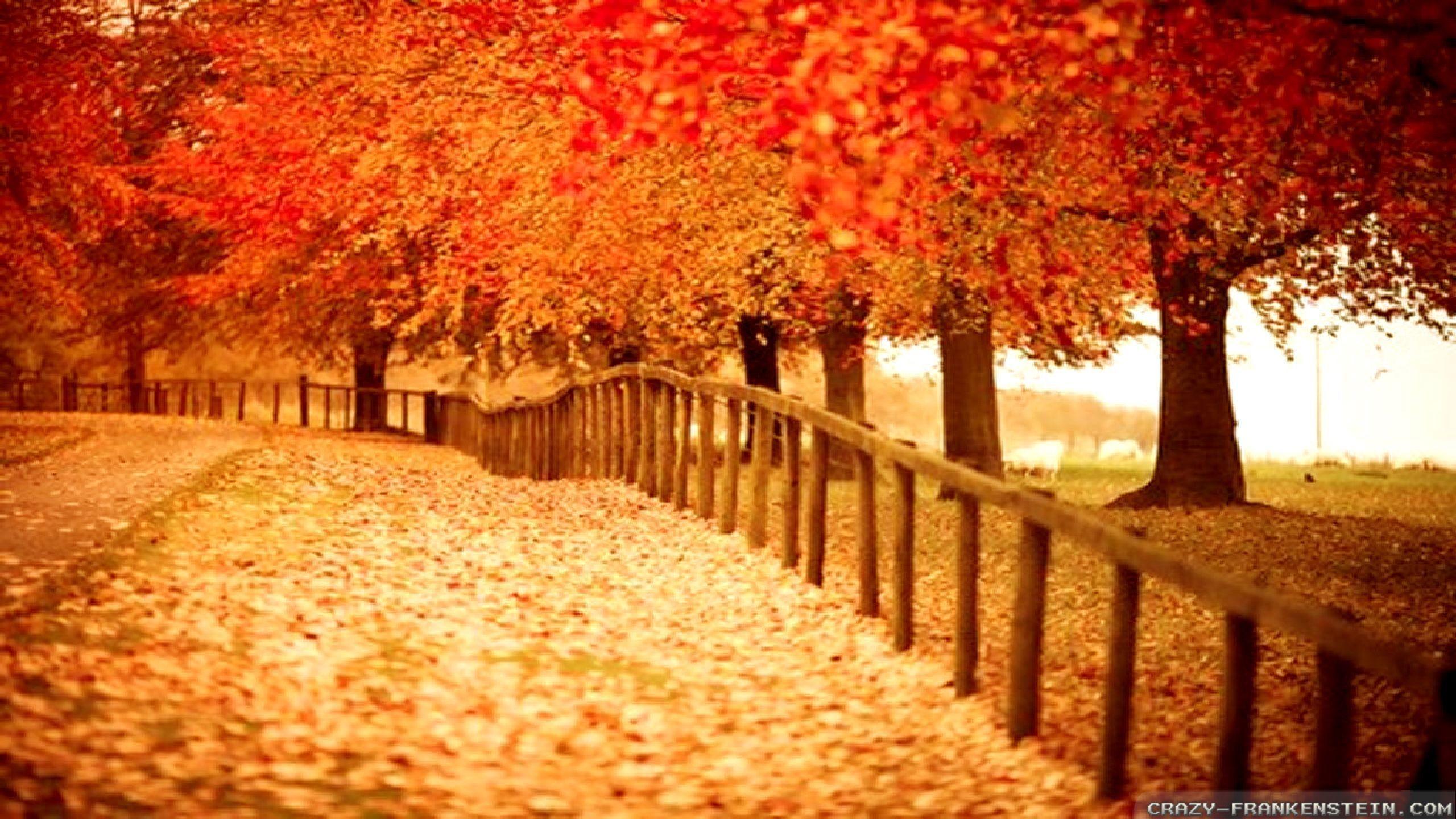 Fall Themed Desktop Backgrounds (46 Wallpapers)